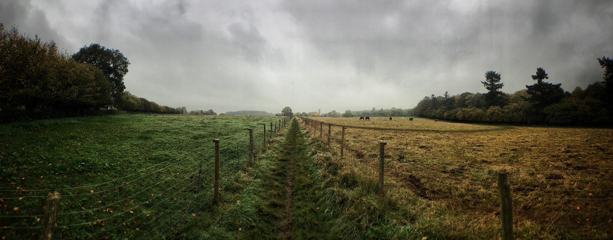 Panoramic View across farmland on a moody, misty Autumn day by beaniedee