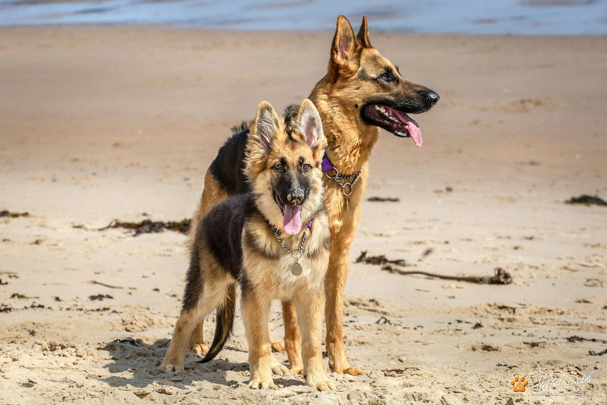 Rosie & Macie by Photohumph