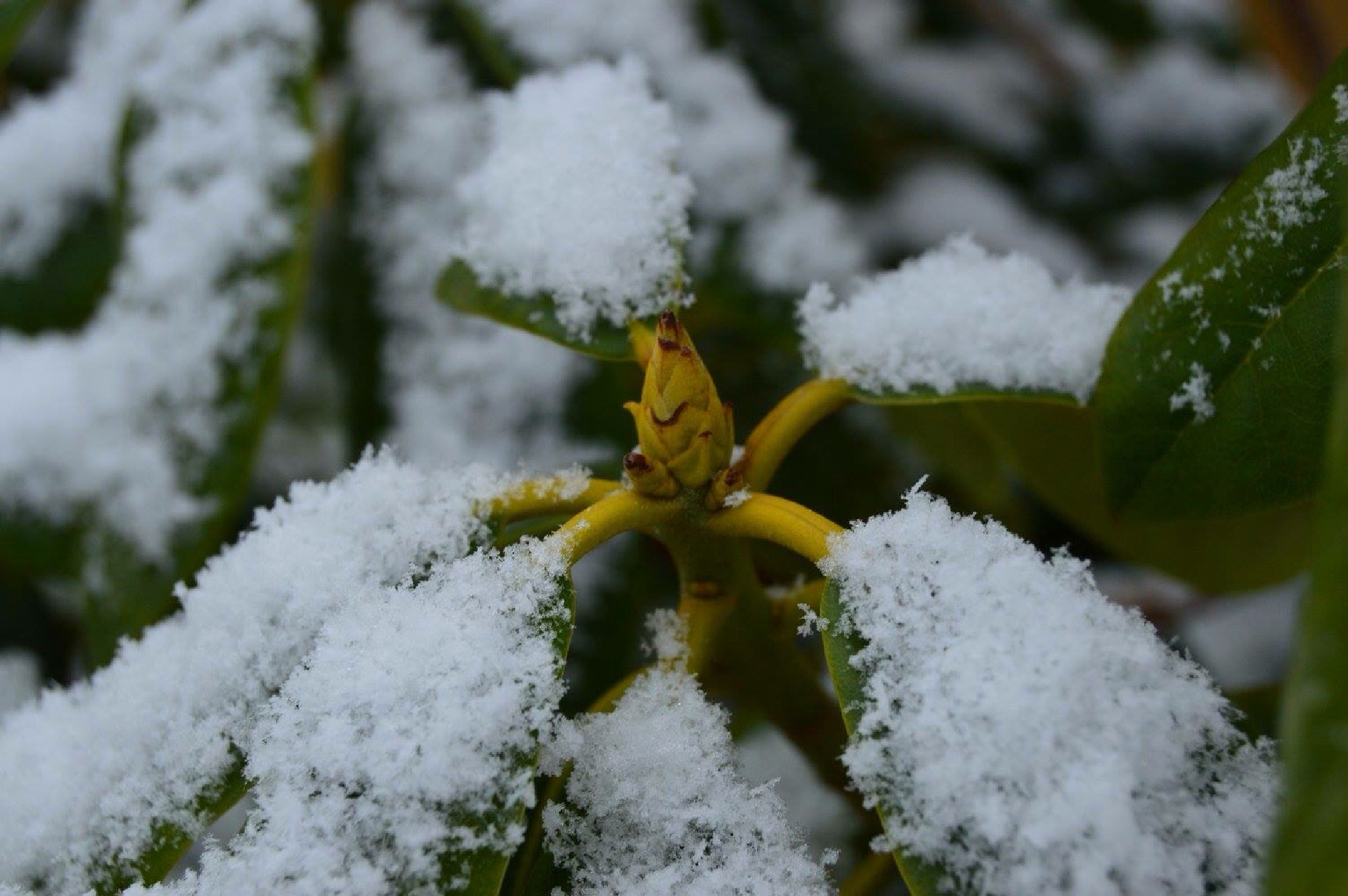 Snow  by Jody Choma