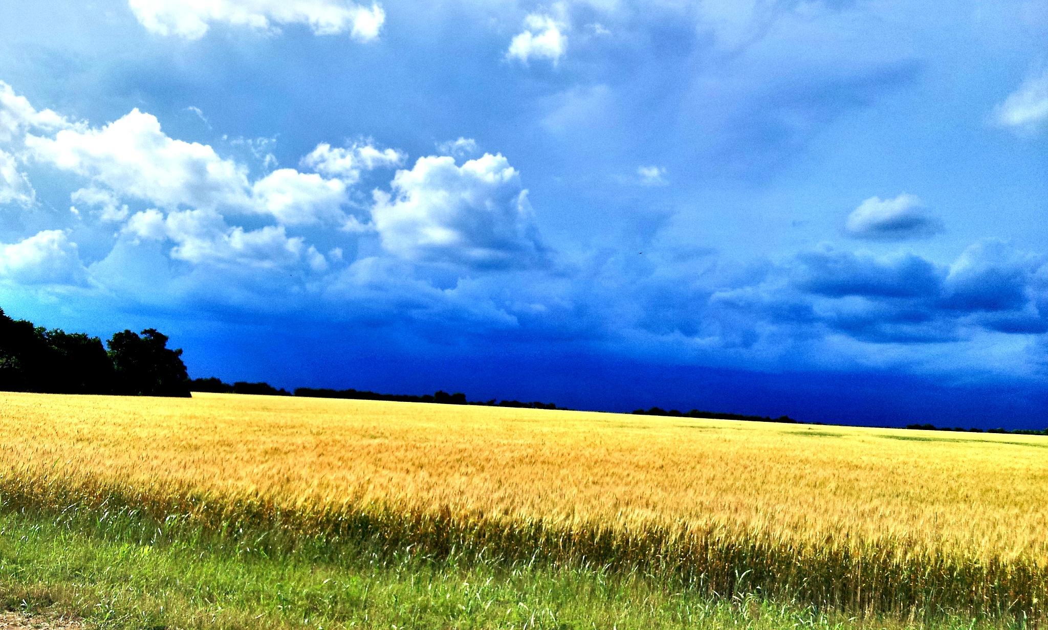 winter wheat  by Steve Wilson
