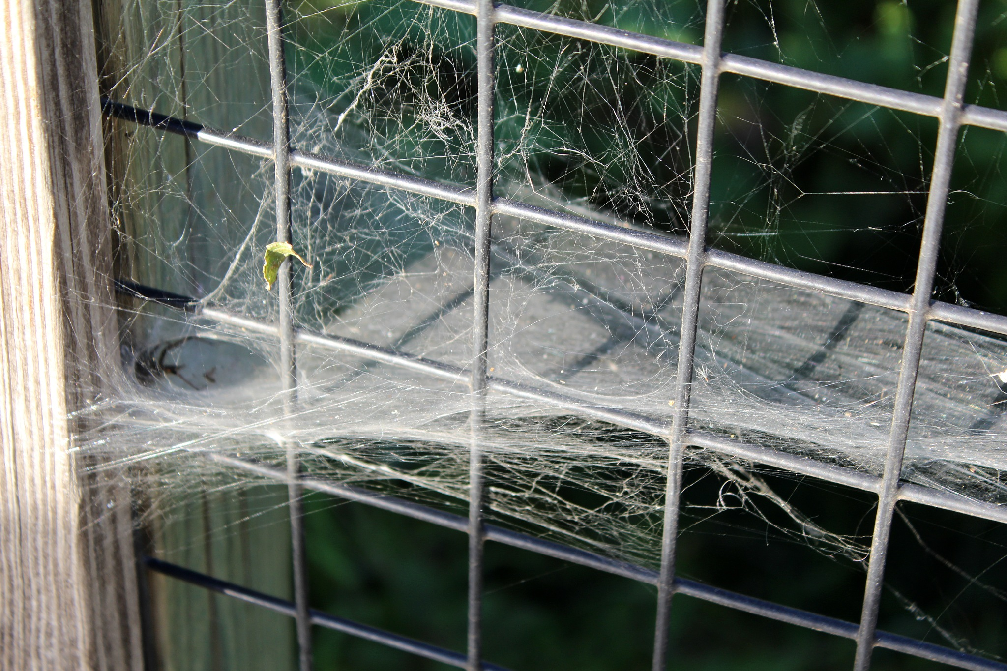 Empty Web by Roger Sims