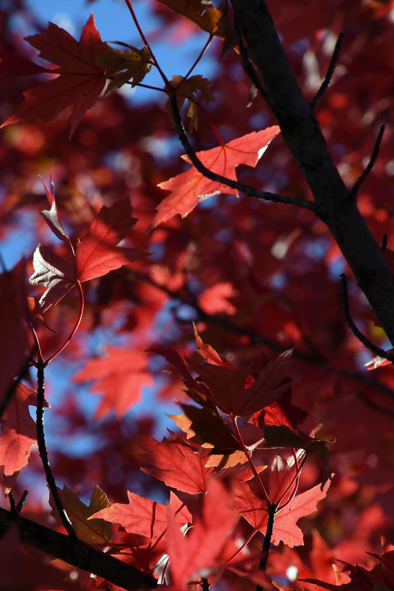 Fall leaves by Roger Sims