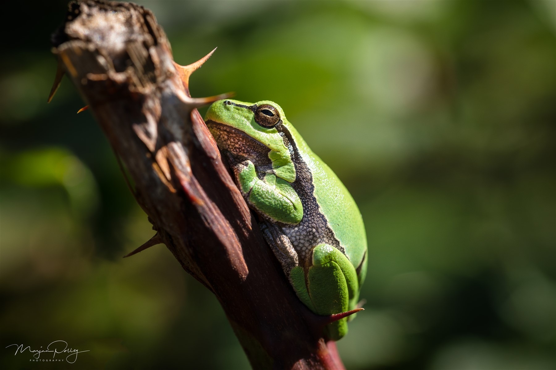 Analyzing humor is like dissecting a frog. Few people are interested and the frog dies of it by  Marjan Polley Photography