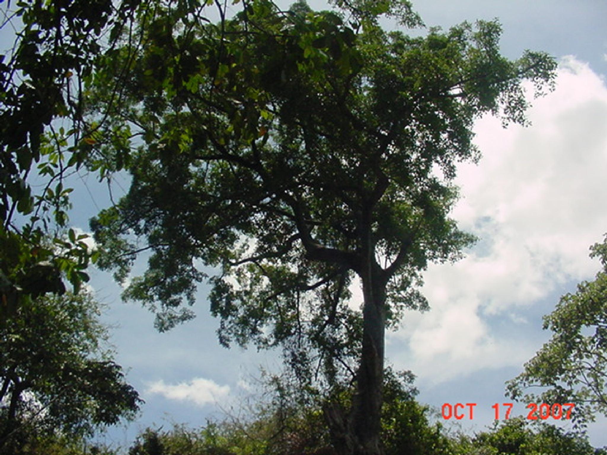 Nice tree by linacb01