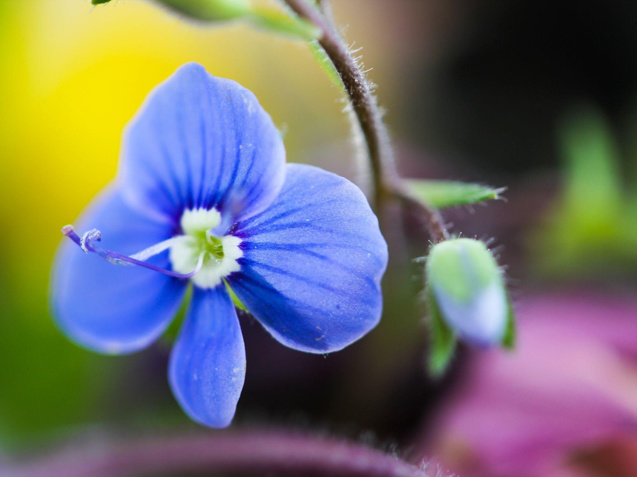 Blue by Turidkarin