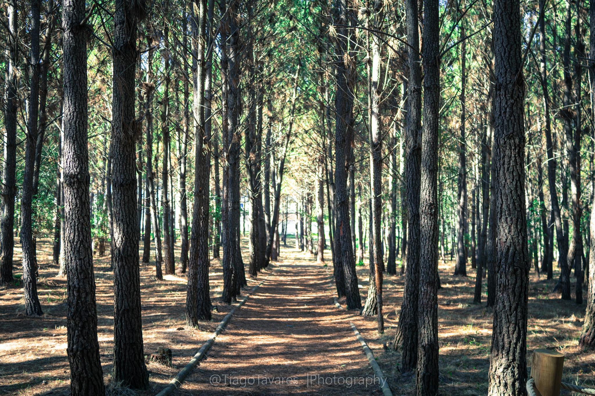 long way by tiagomiguel9615