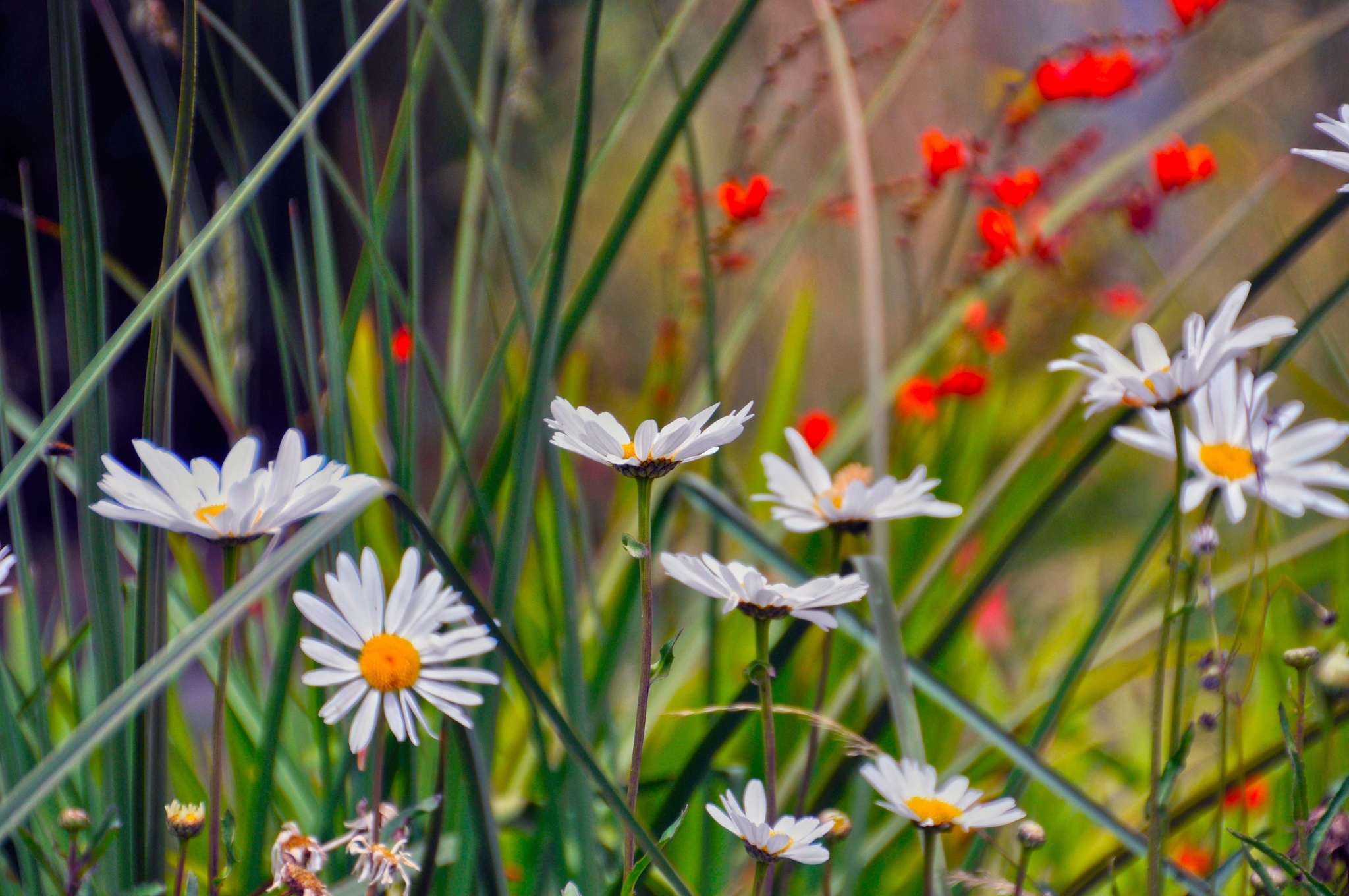 Summer Flowers by stefan pettersson
