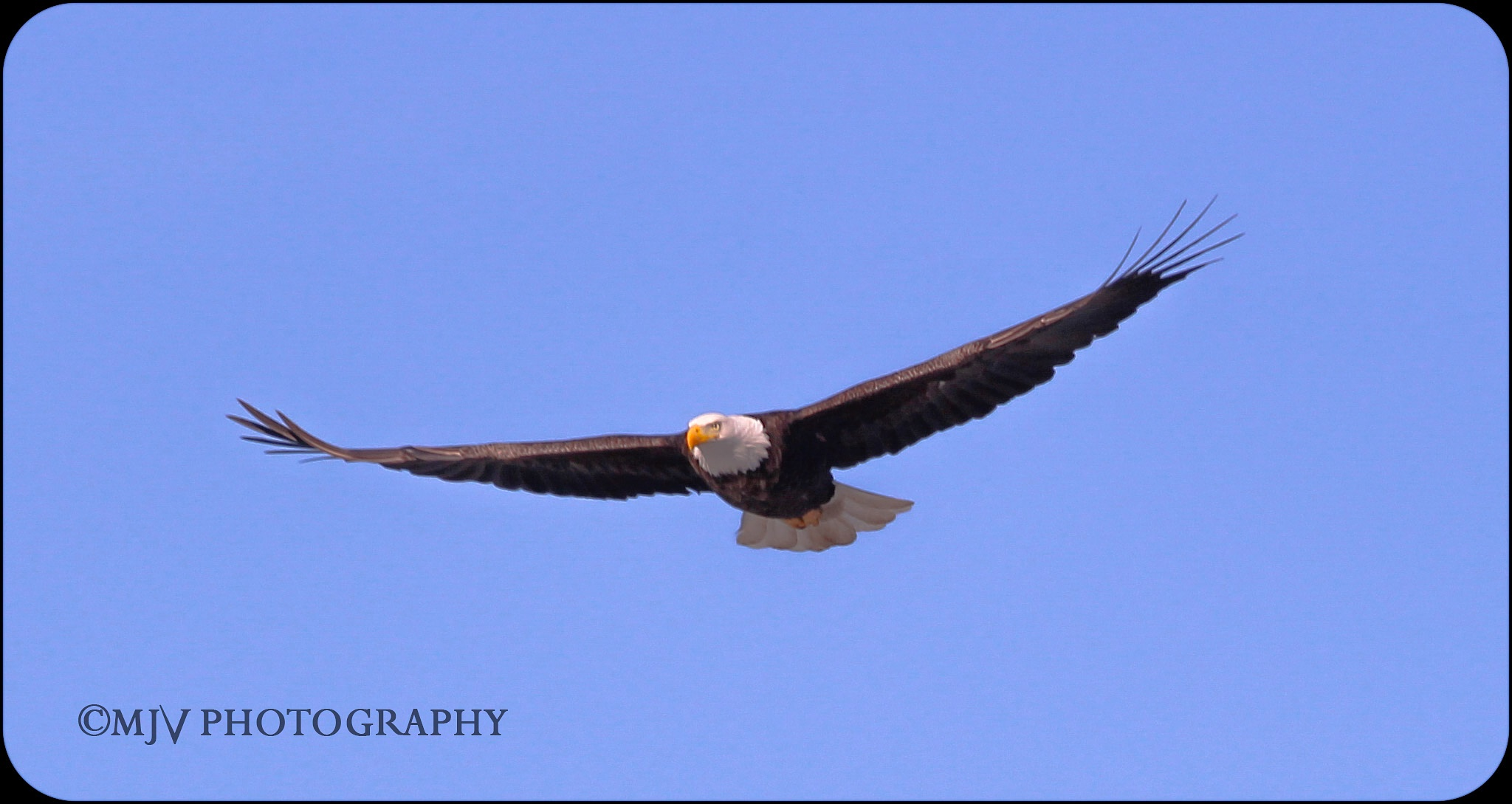 Perfect View caught in the right time Eagle  by mjvphotography73