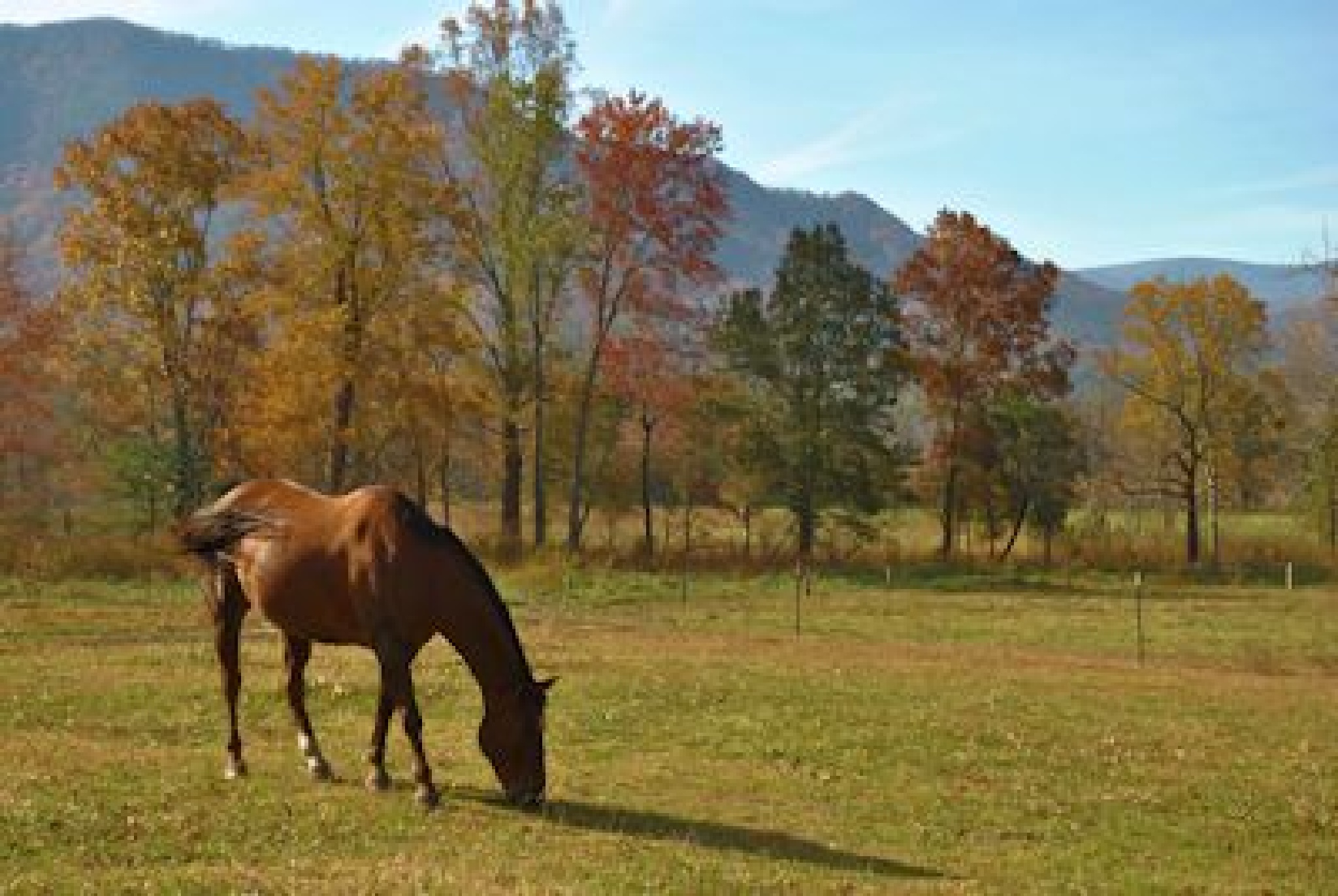 Horse at Cades Cove by Thomas Bouldin