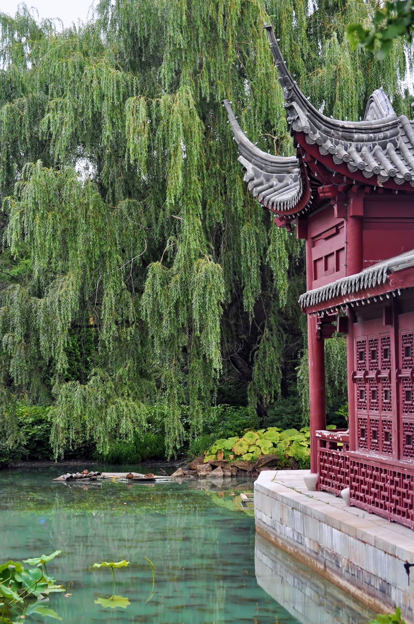 Chinese Garden by Mirto