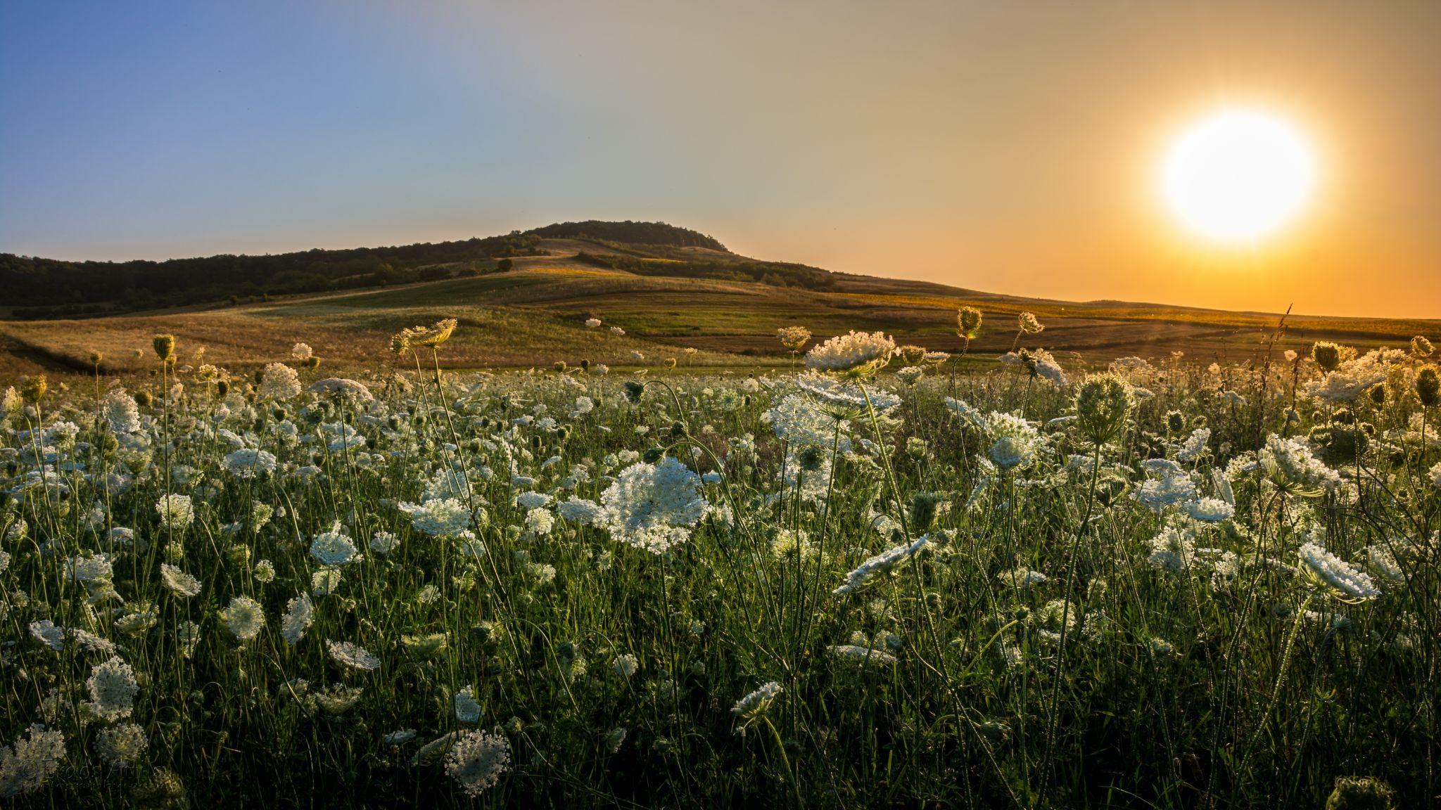 Before The Sun Sets by rdsattila