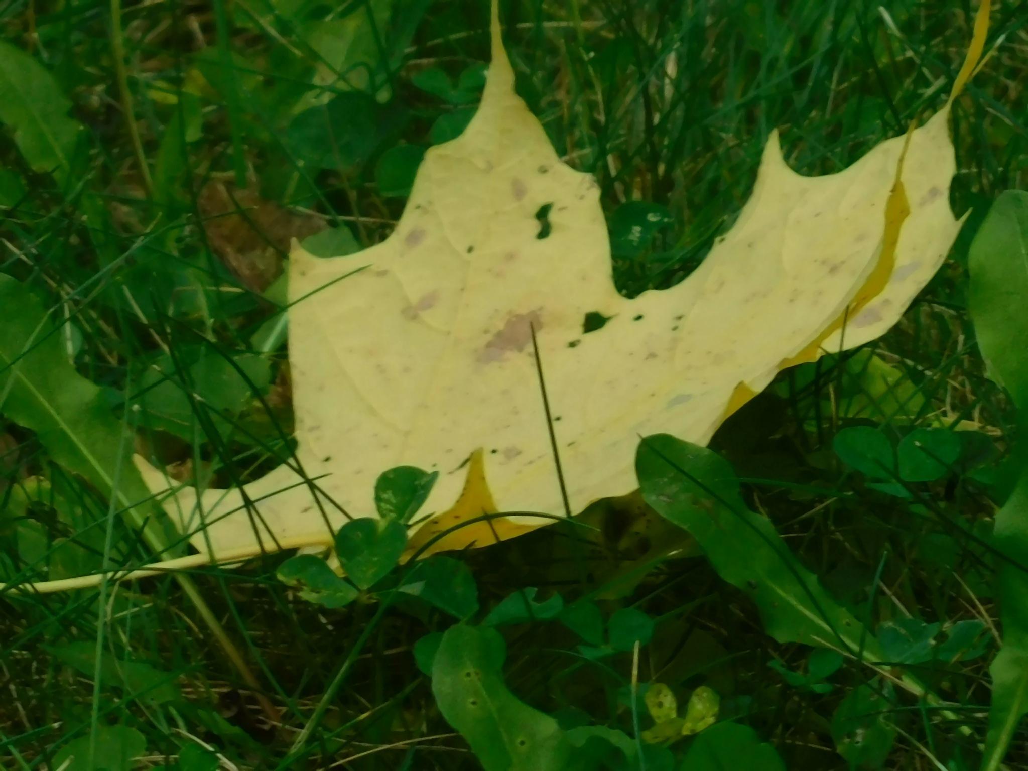 A Single Leaf by Stacey J. Cunningham
