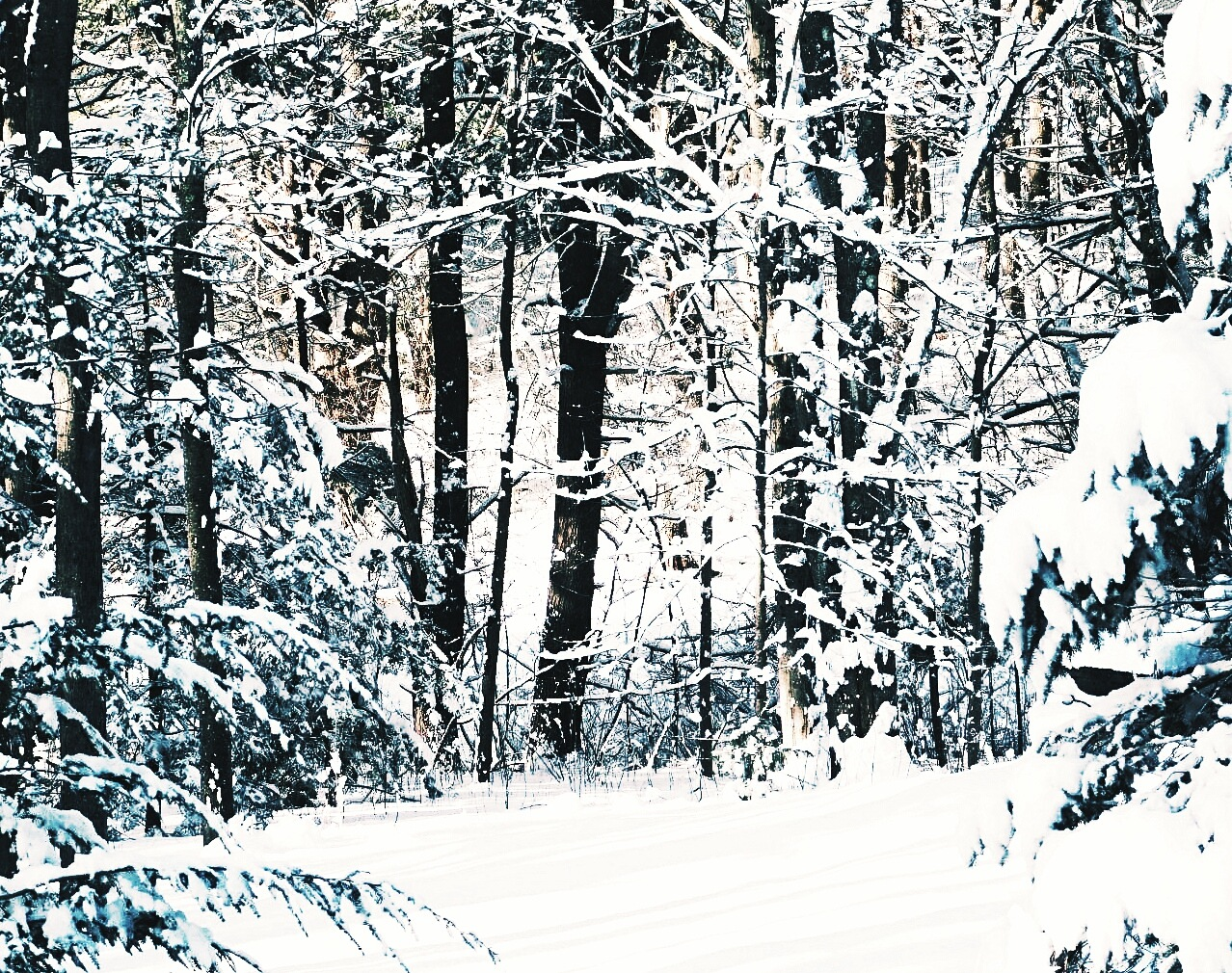 The Soft Side of Winter by Stacey J. Cunningham