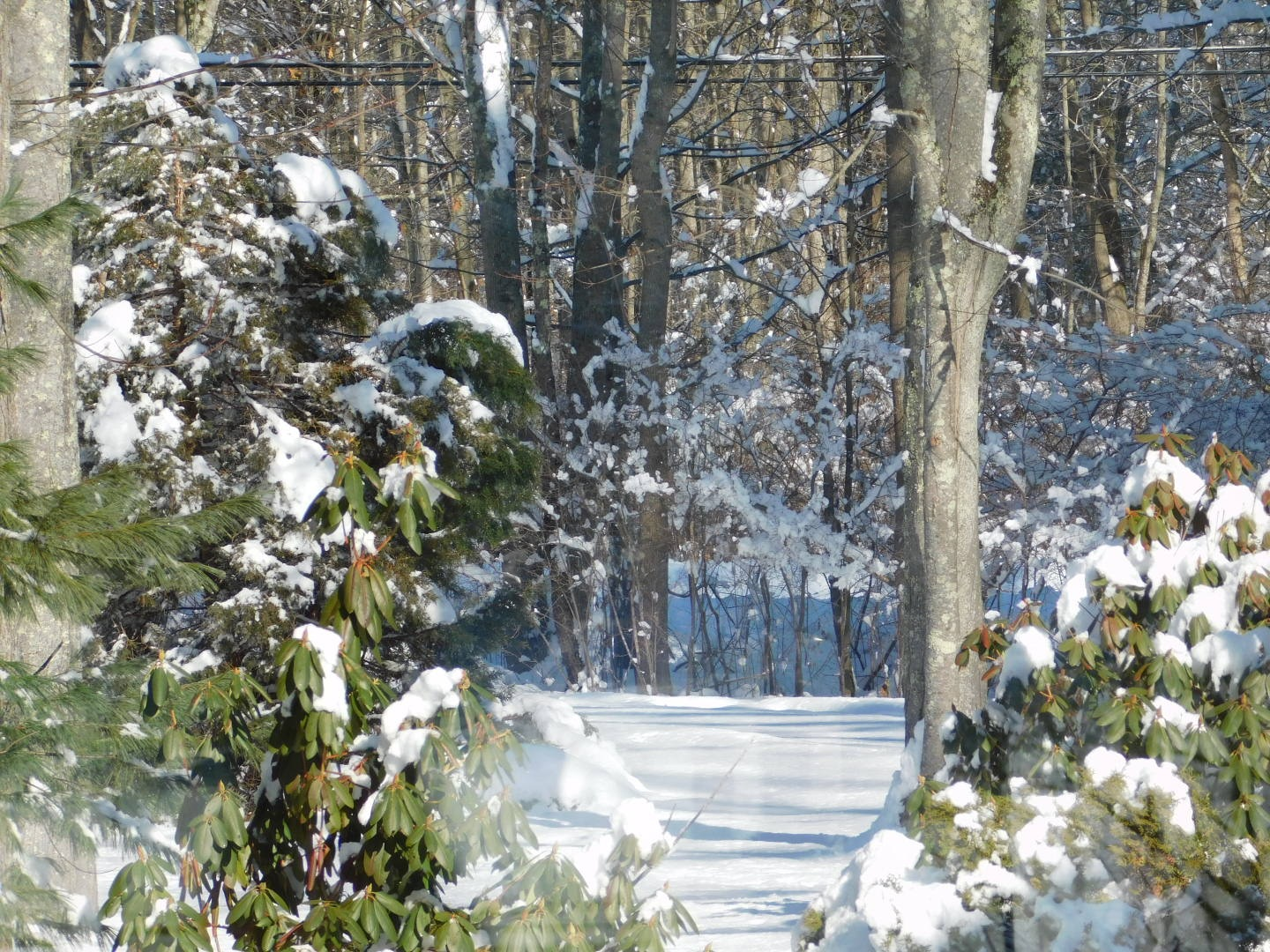 Snow Falls Again by Stacey J. Cunningham