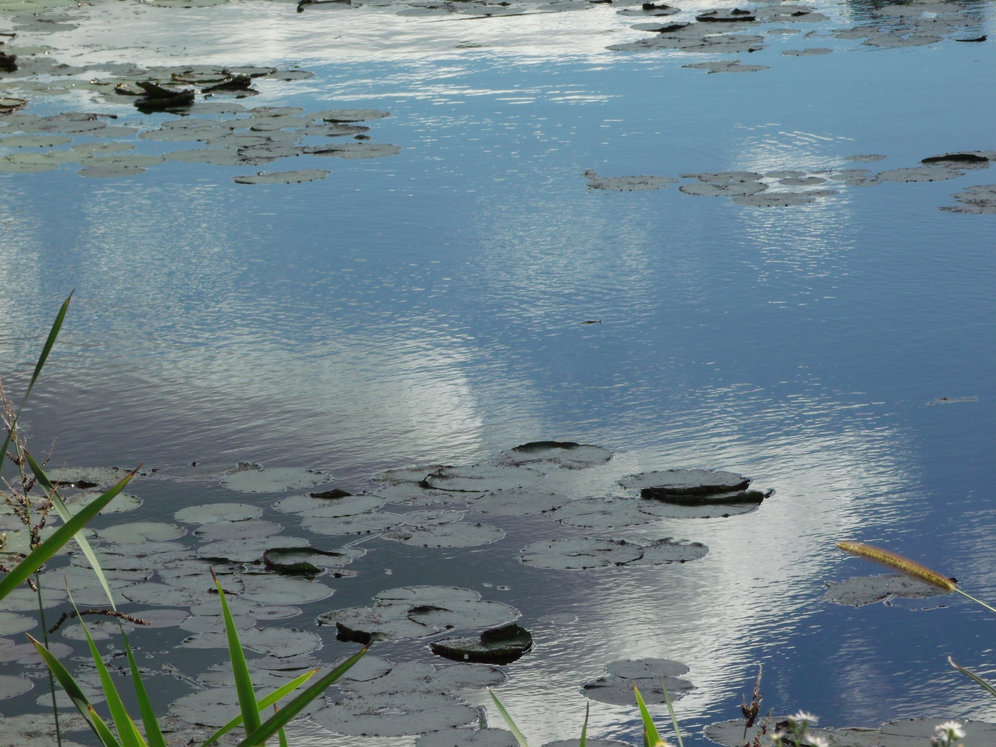 Marsh in September by Stacey J. Cunningham