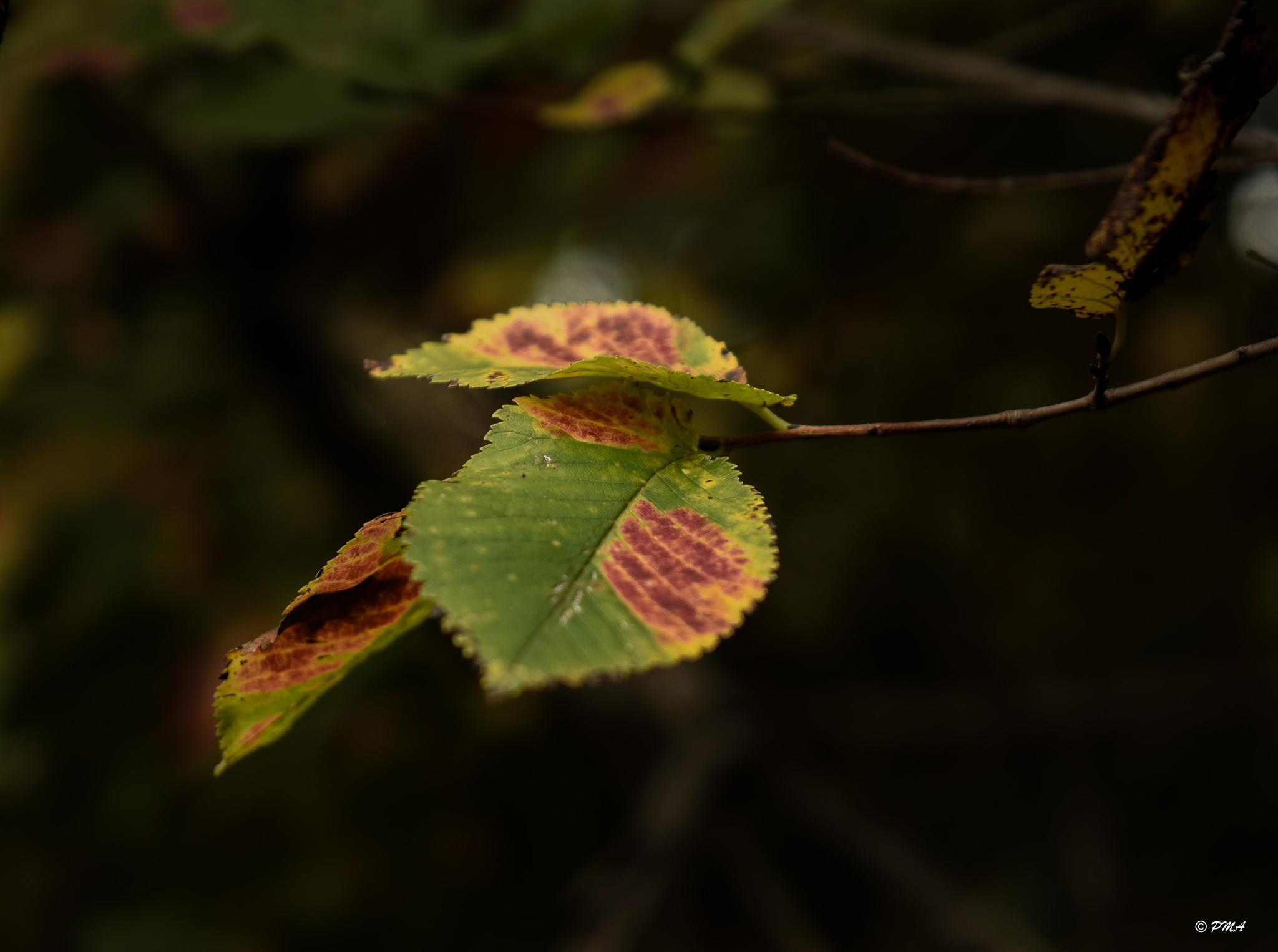 autunno by paomas61