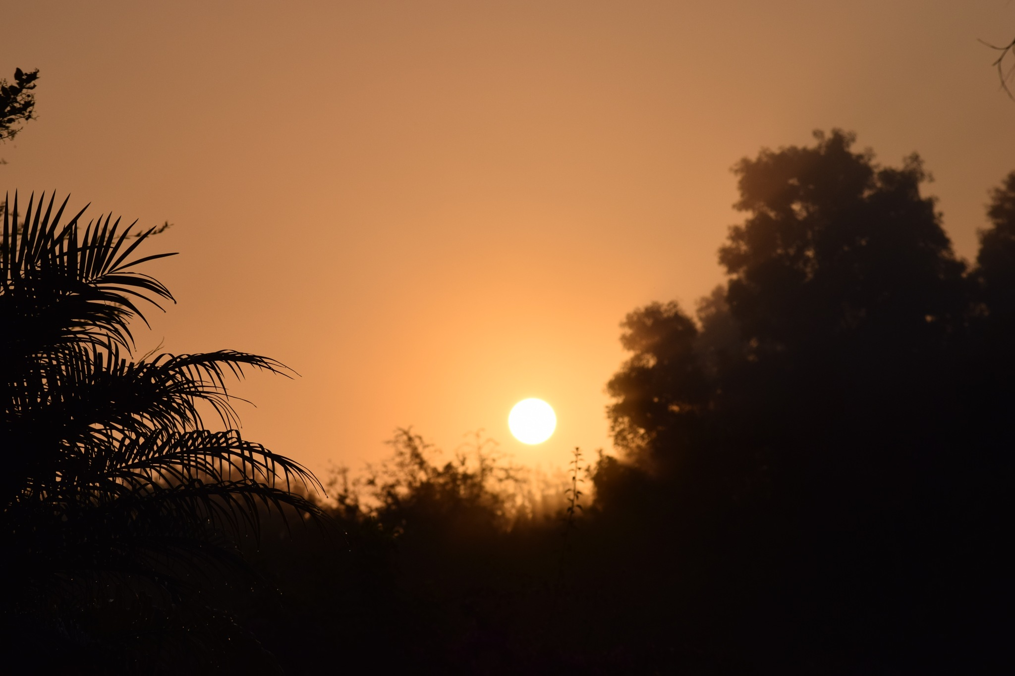 Back yard sunrise by KMcCord