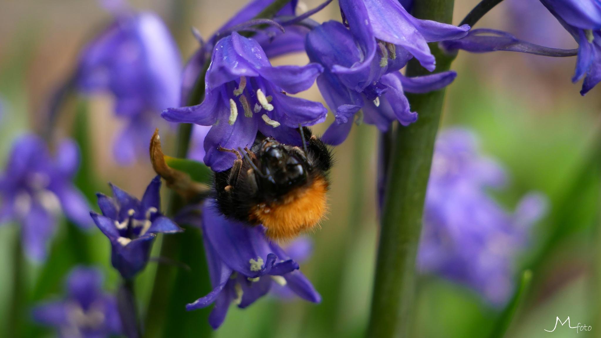 Bumblebee 2 by JMLart