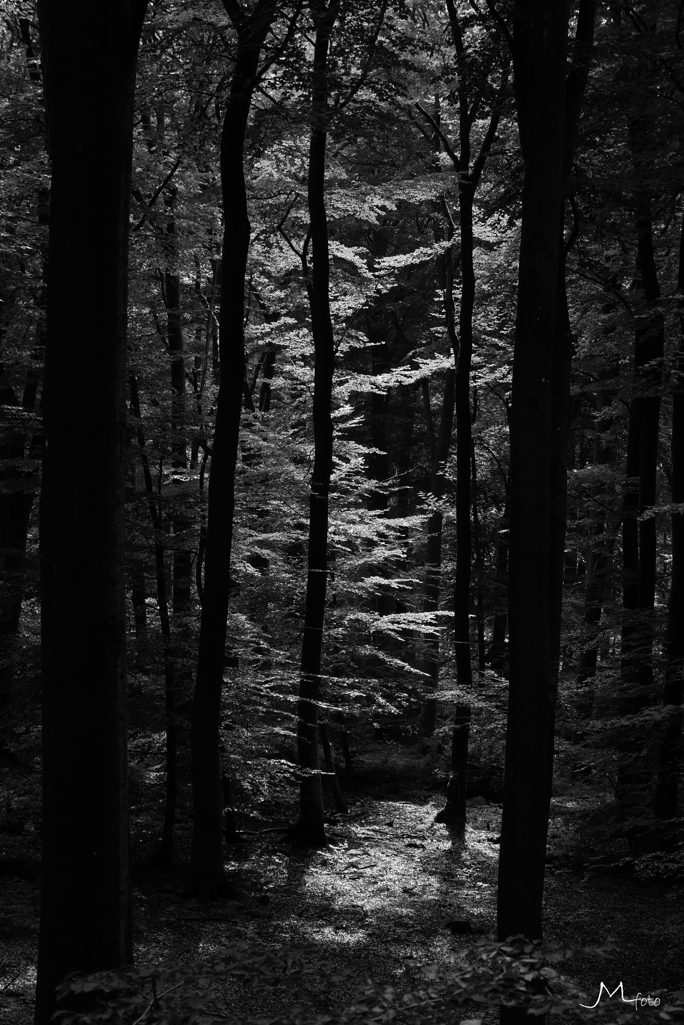 Shadows 2 by JMLart