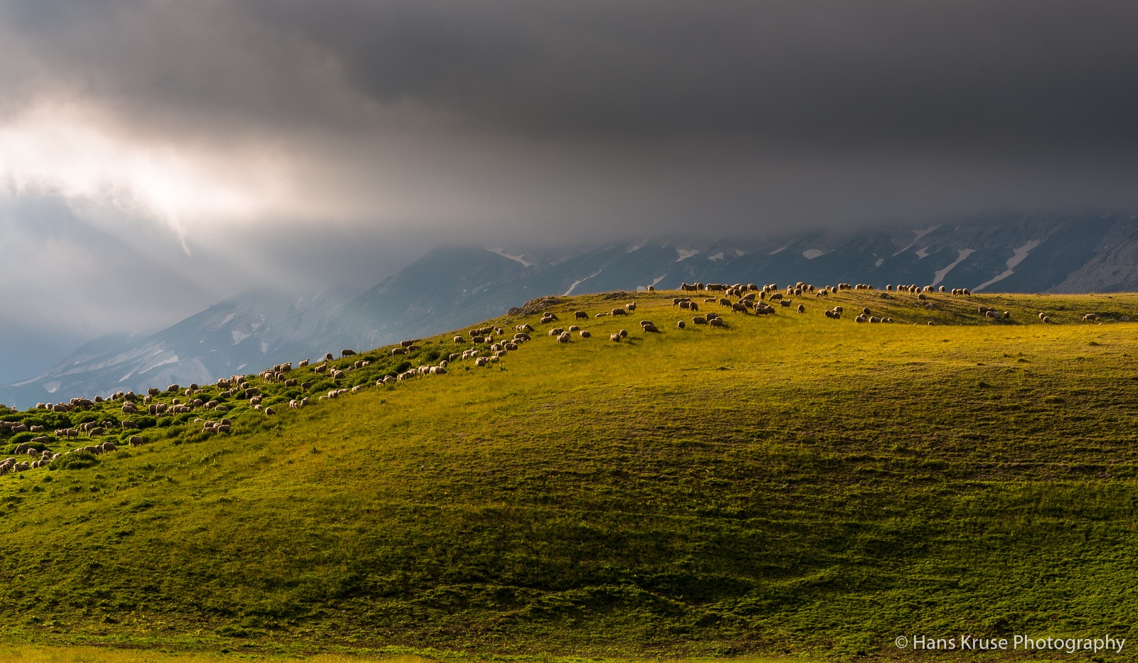 Sheep in the hills by Hans Kruse