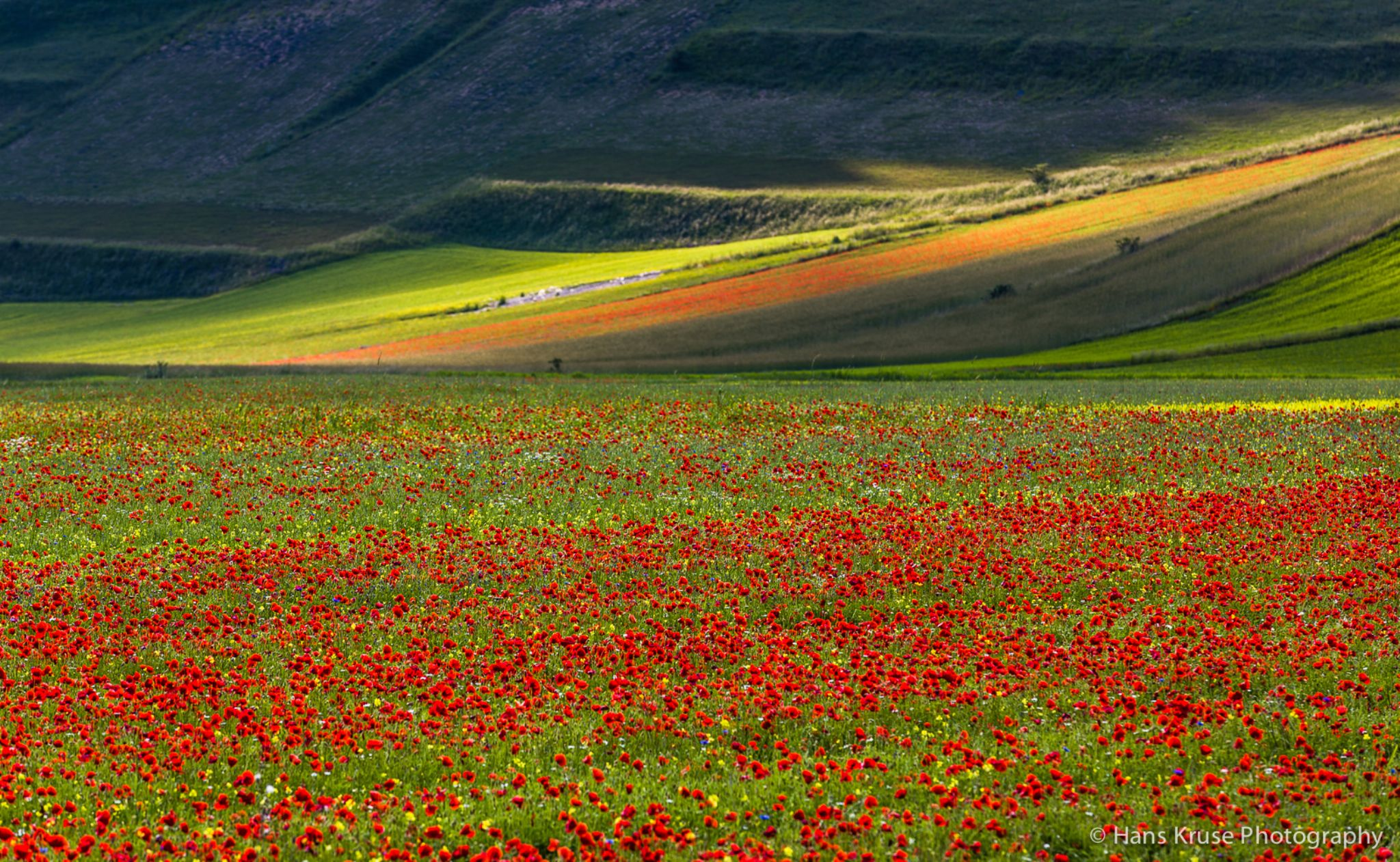 Flowers in afternoon sun by Hans Kruse