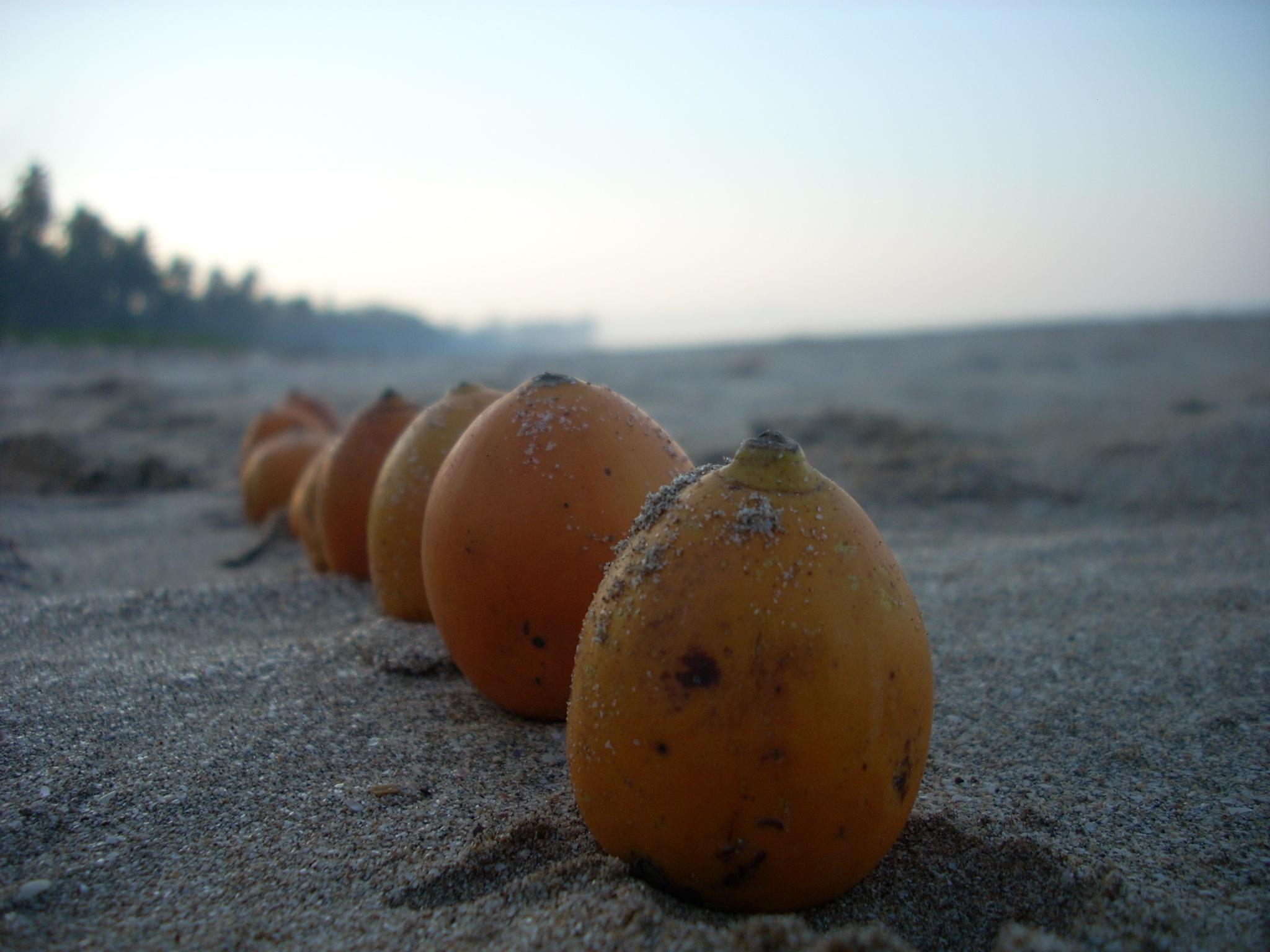 Areca nut by the sea  by Rohan Choudhari