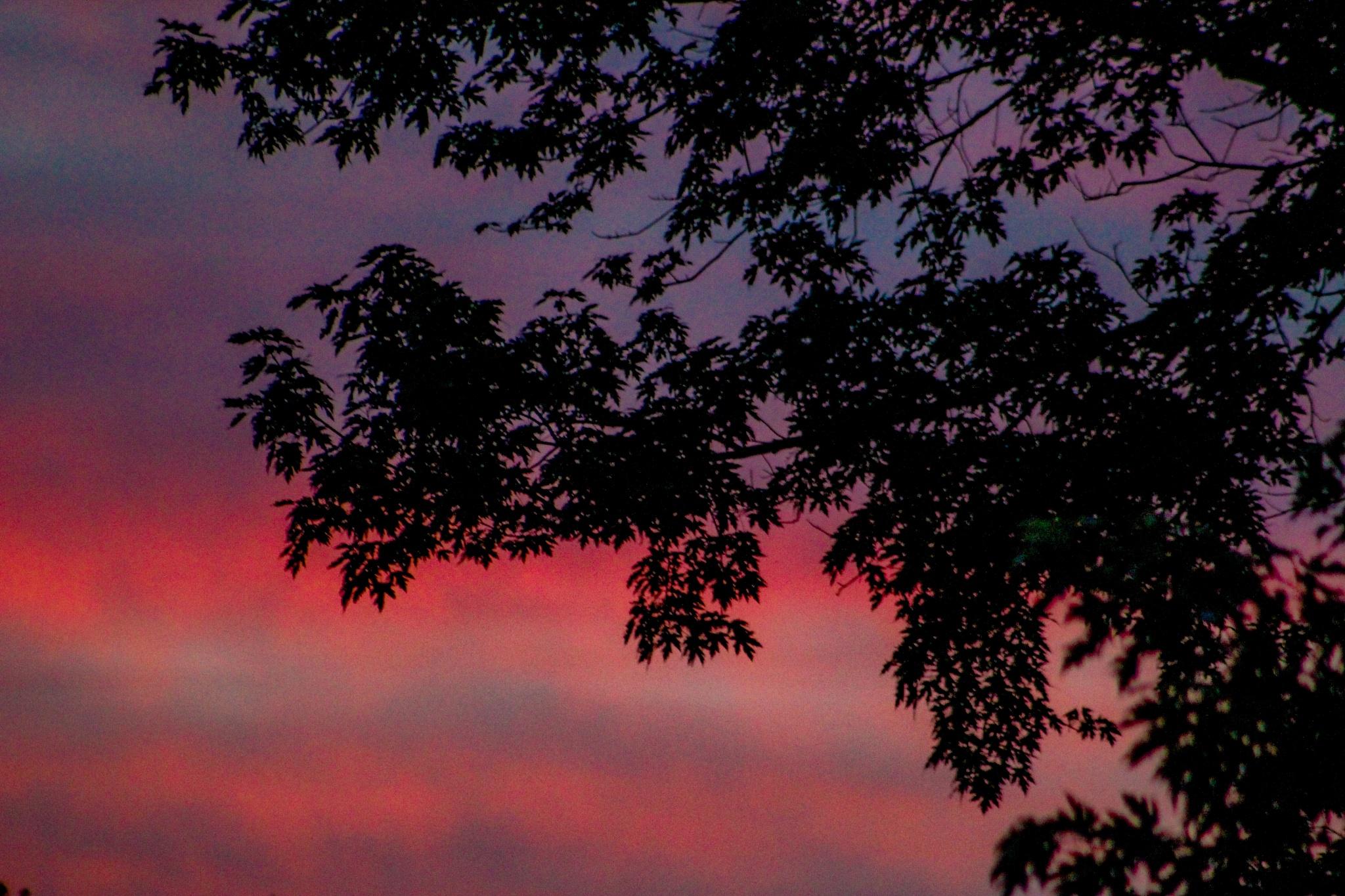 Sunset 1,045,659 by Johnny K