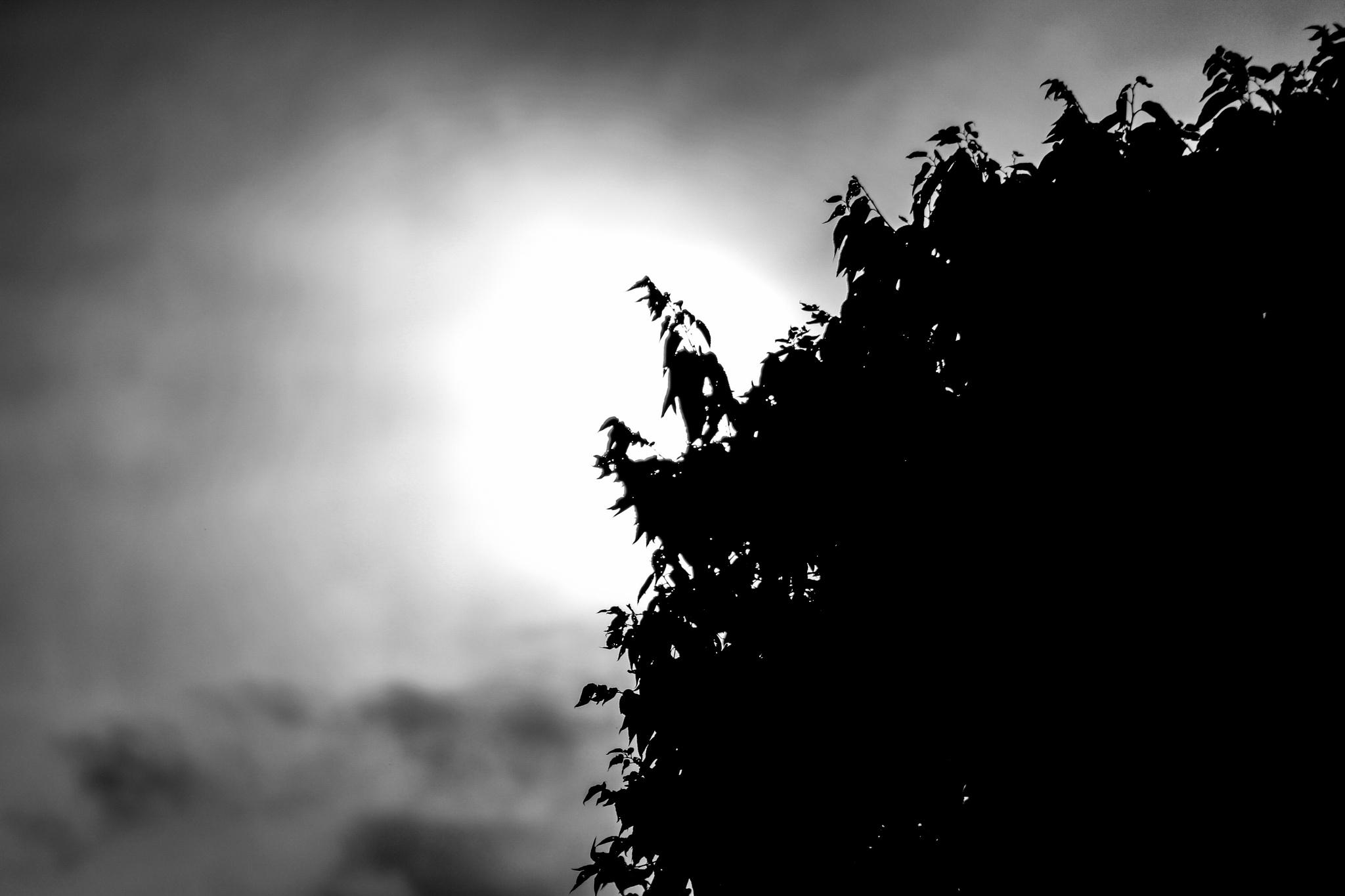 B/W Sunset by Johnny K
