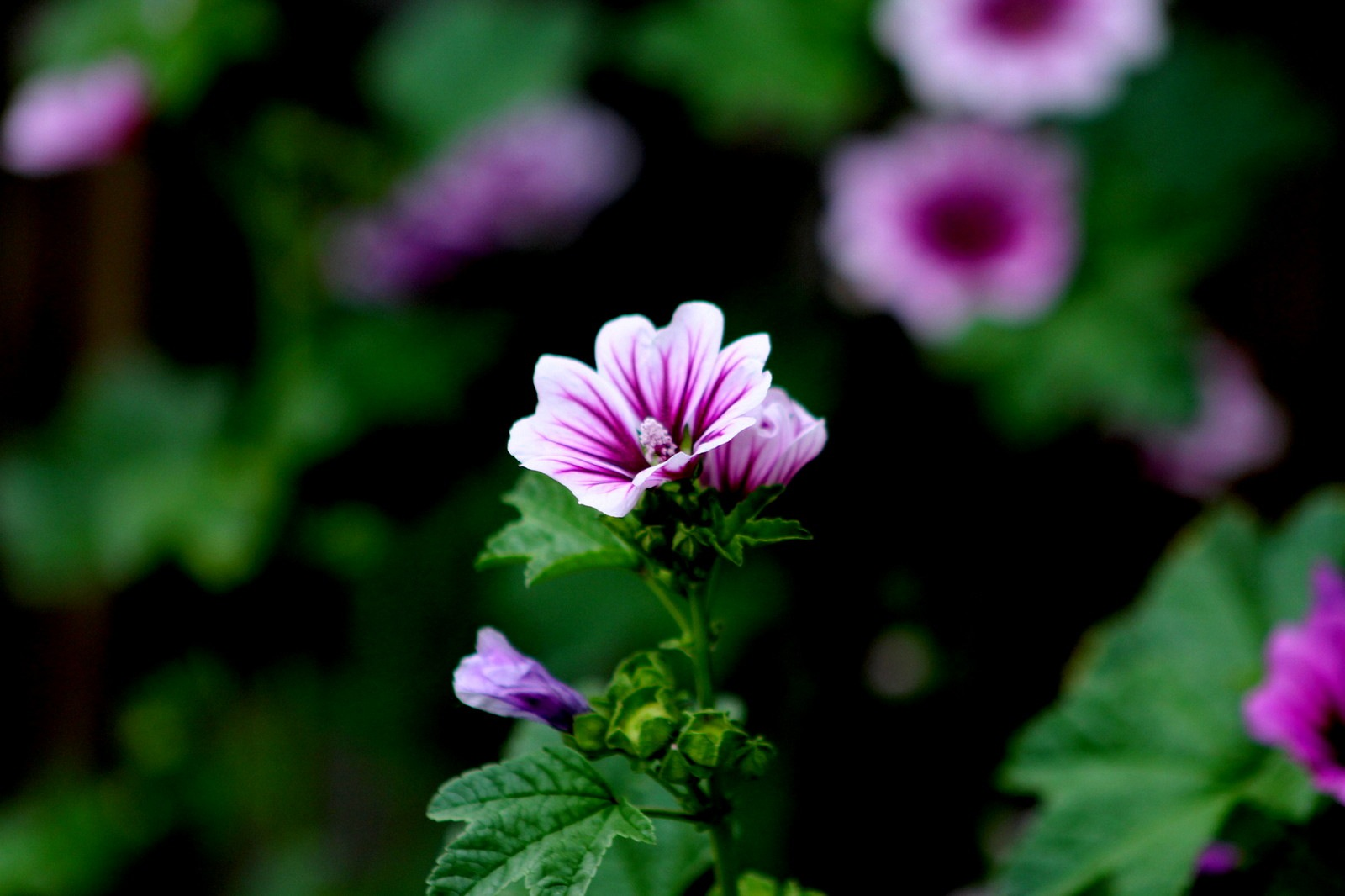 FLOWERS - SEPTMEBER by Cathy C Photography