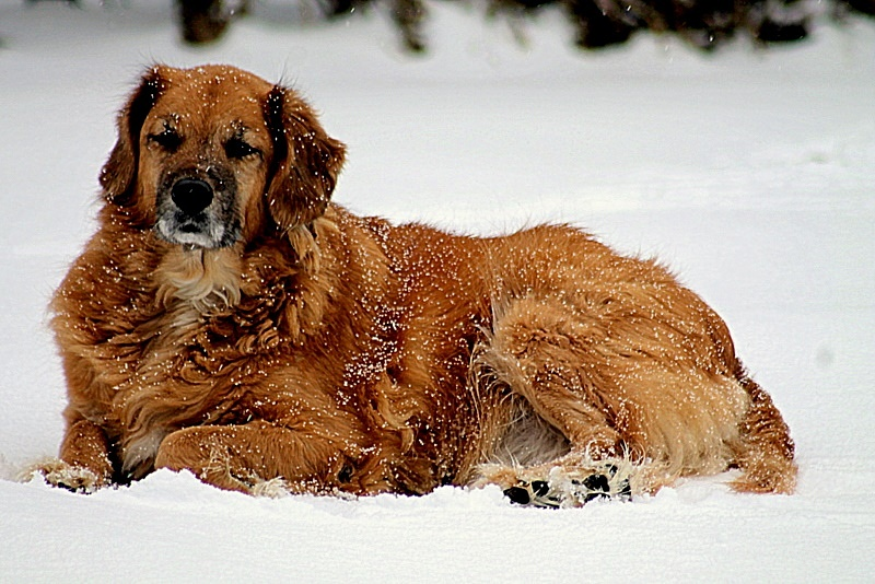 Snowy  dog  by Cathy C Photography