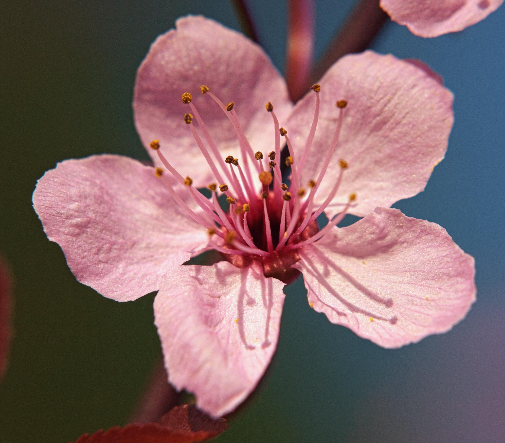 Endlich Frühling :-) by Blandyna Bogdol