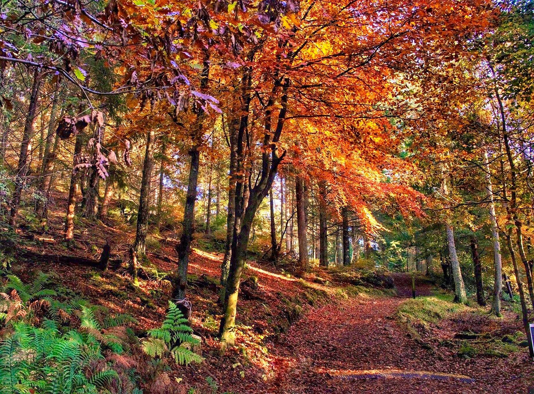Faskally Woods  by Stephen Miller