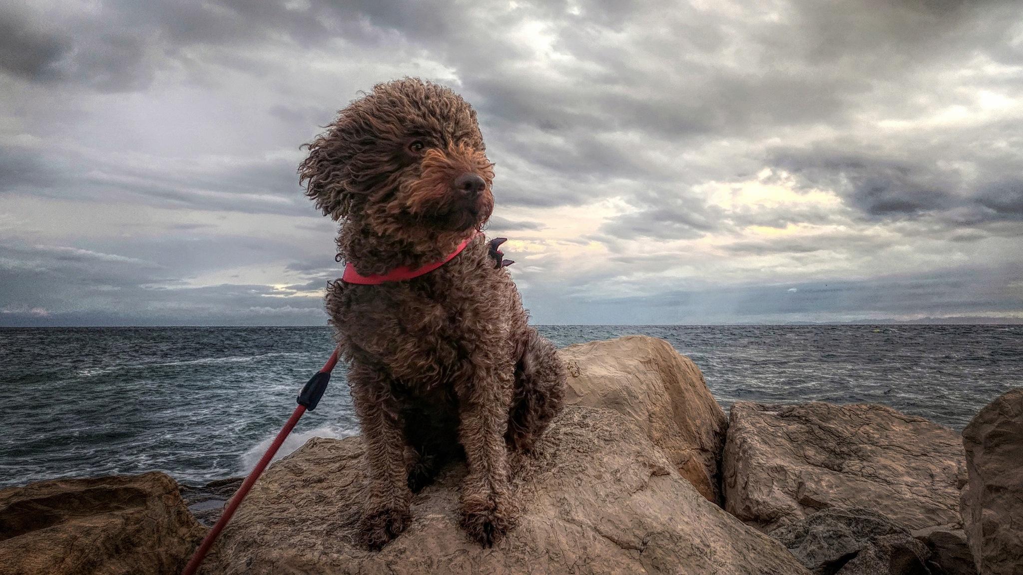 Windy , stormy and rainy by Maja Stein