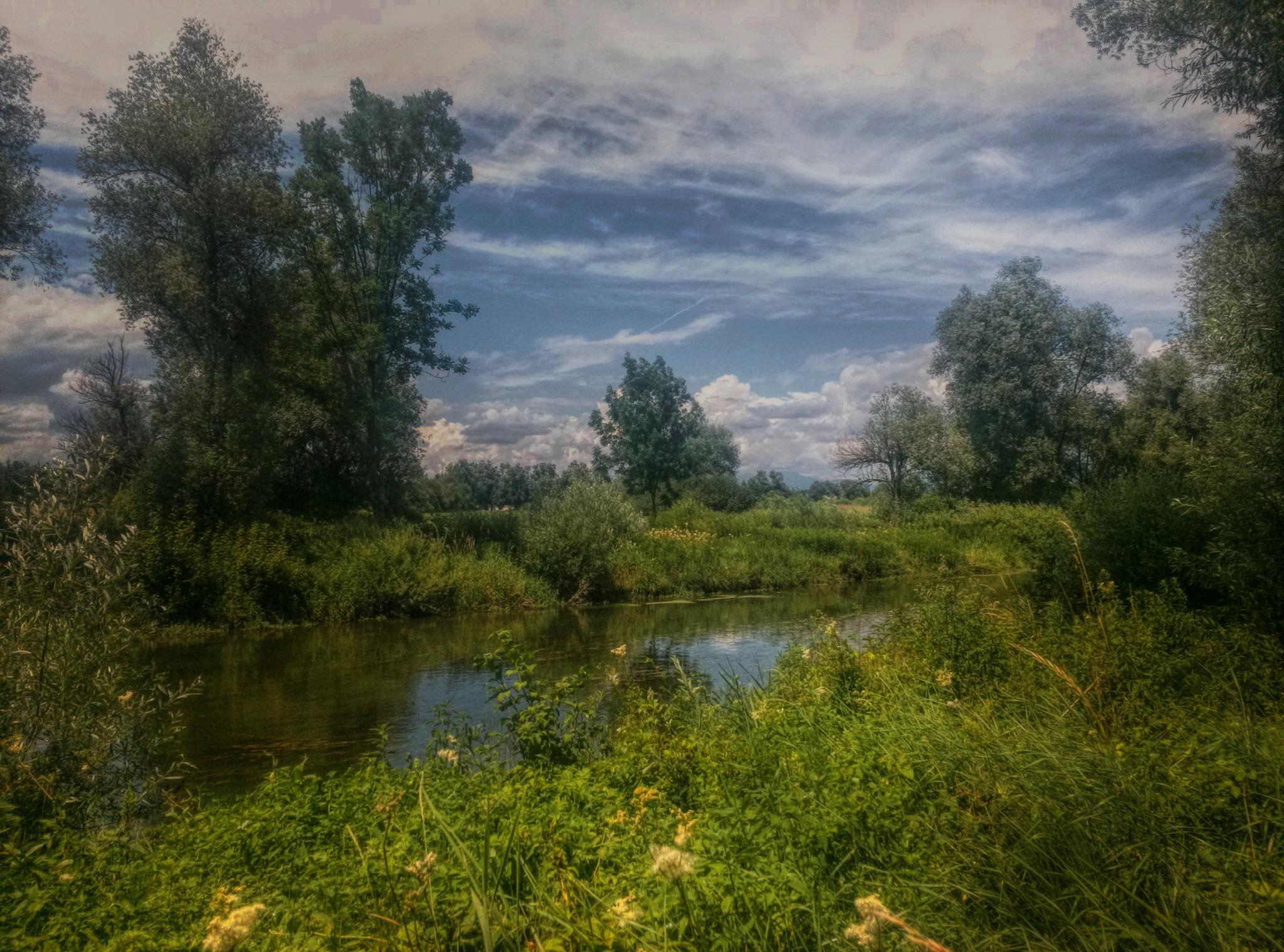Water & trees  by Maja Stein