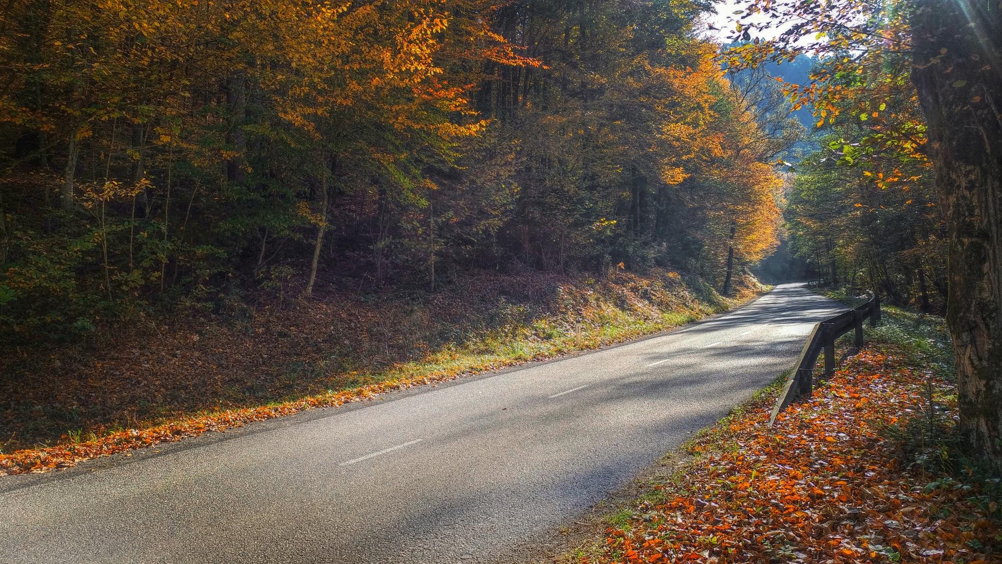 Autumn road.. by Maja Stein