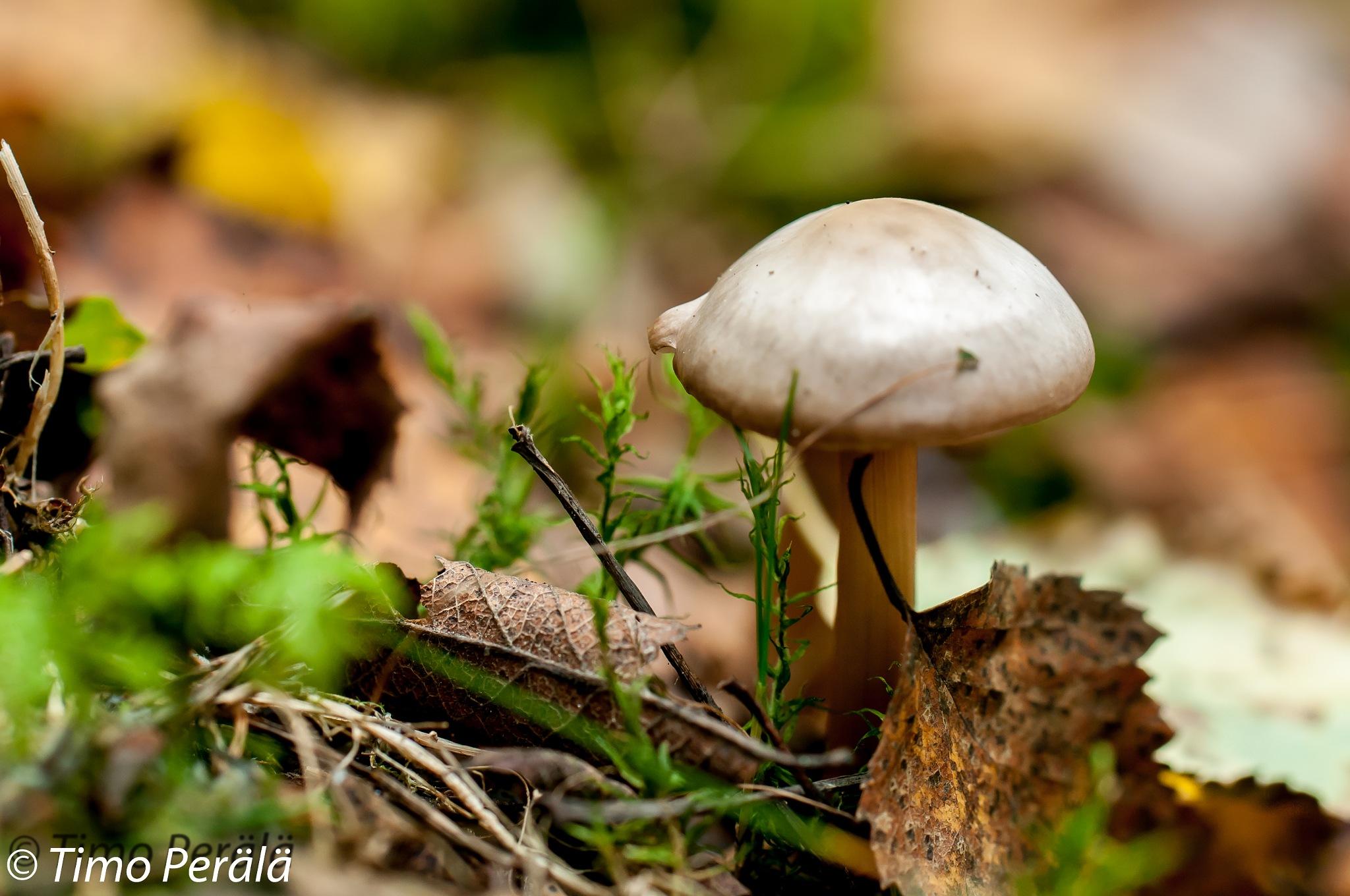 Mushroom by Timo Perala