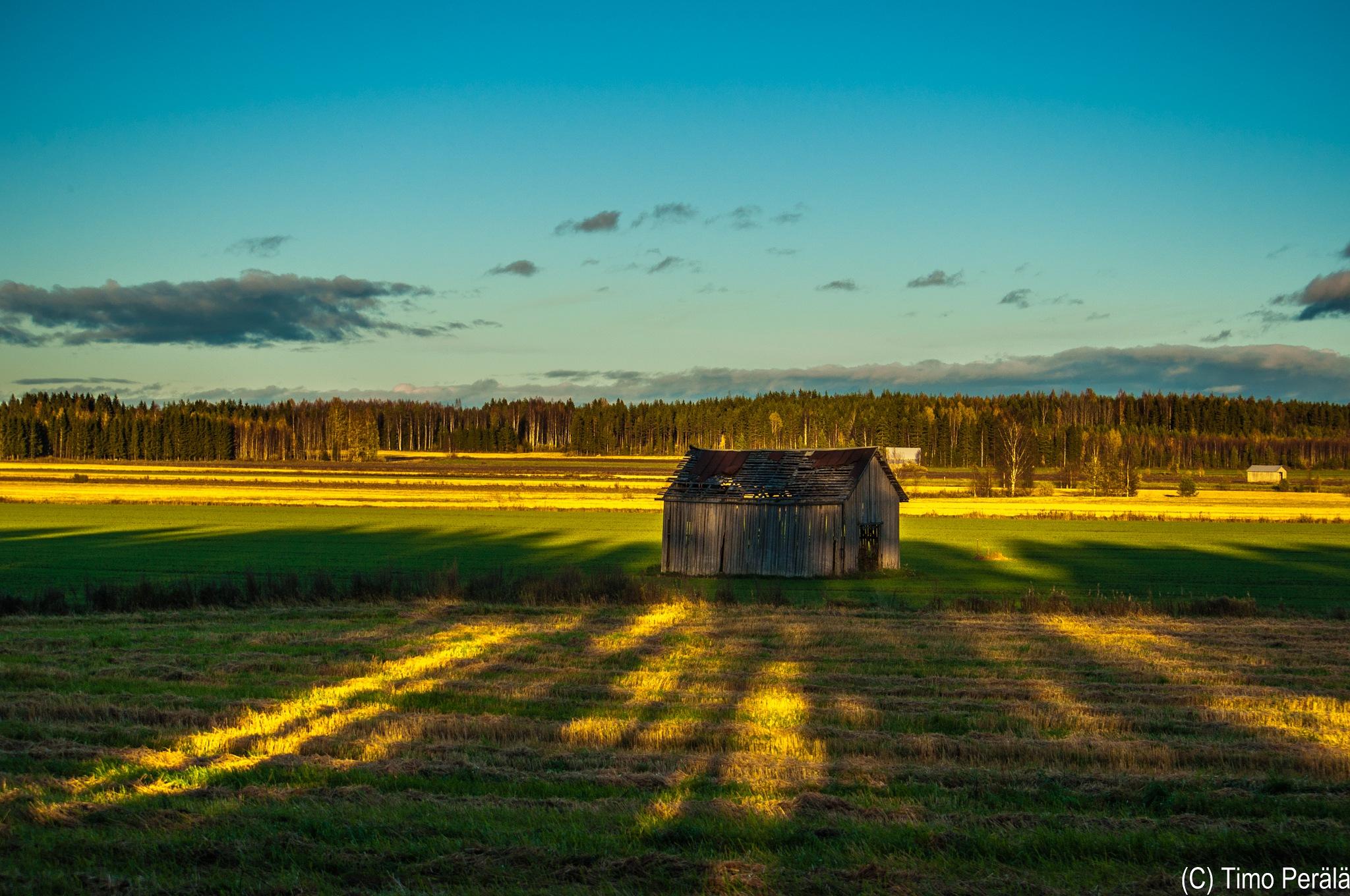 Shadows reach the barn by Timo Perala