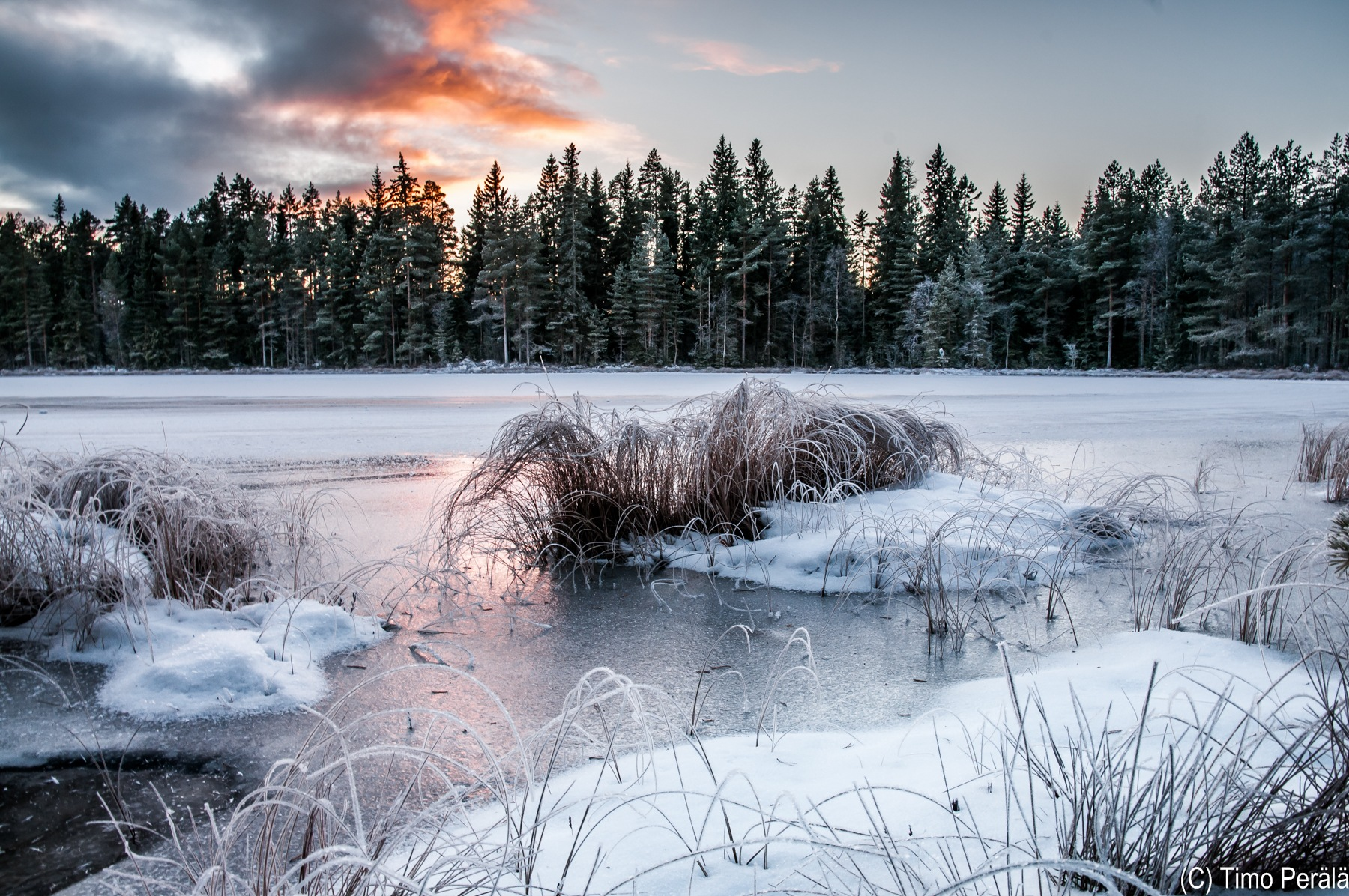 Small lake become swampy by Timo Perala