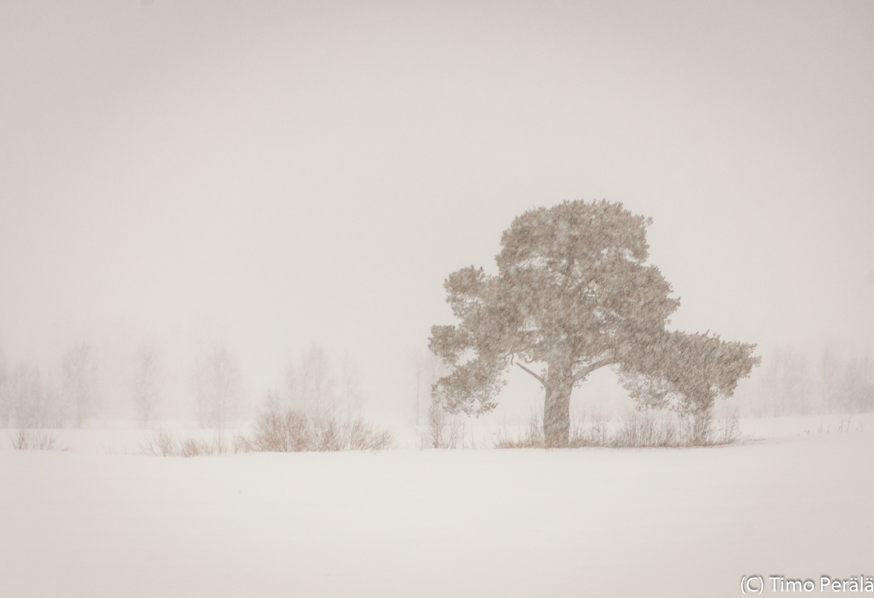 Snowing by Timo Perala