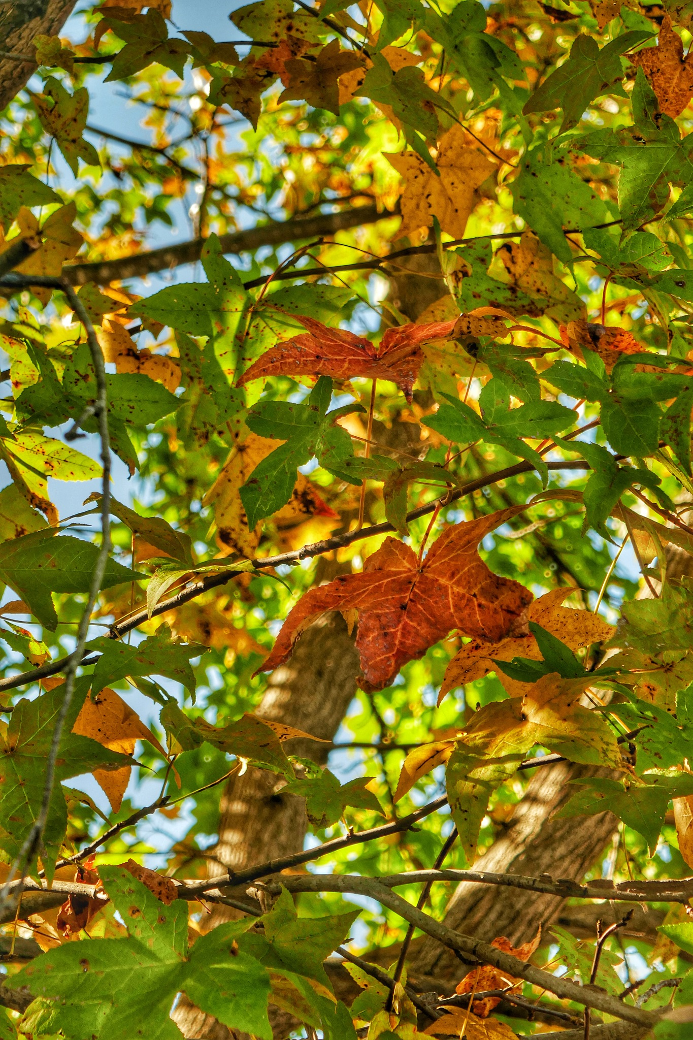 'tis Autumn by Gene Graham
