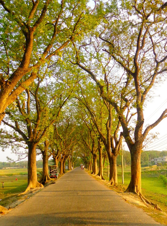 Road to village by Amdadul Hasan