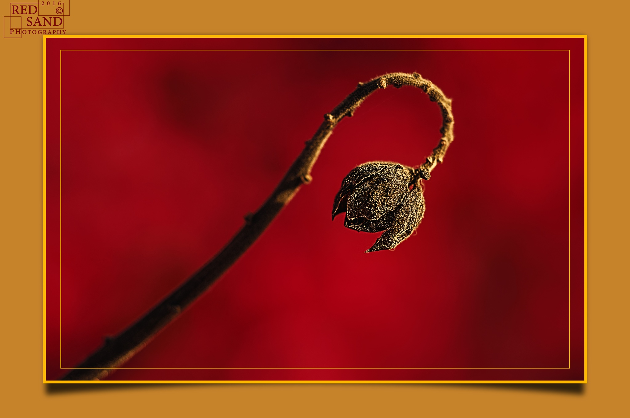 Nature's Hook 2 by Red Sand