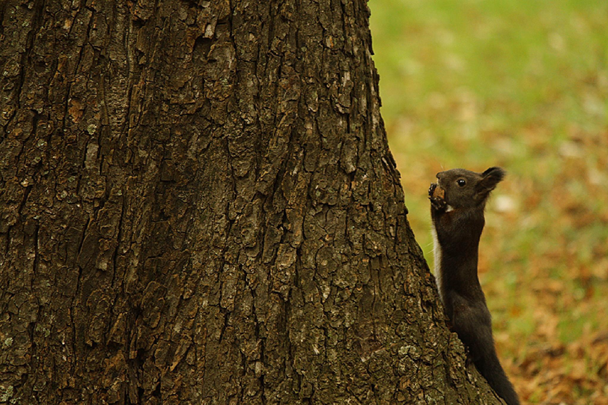 Photo in Nature #park #autumn #squirrels