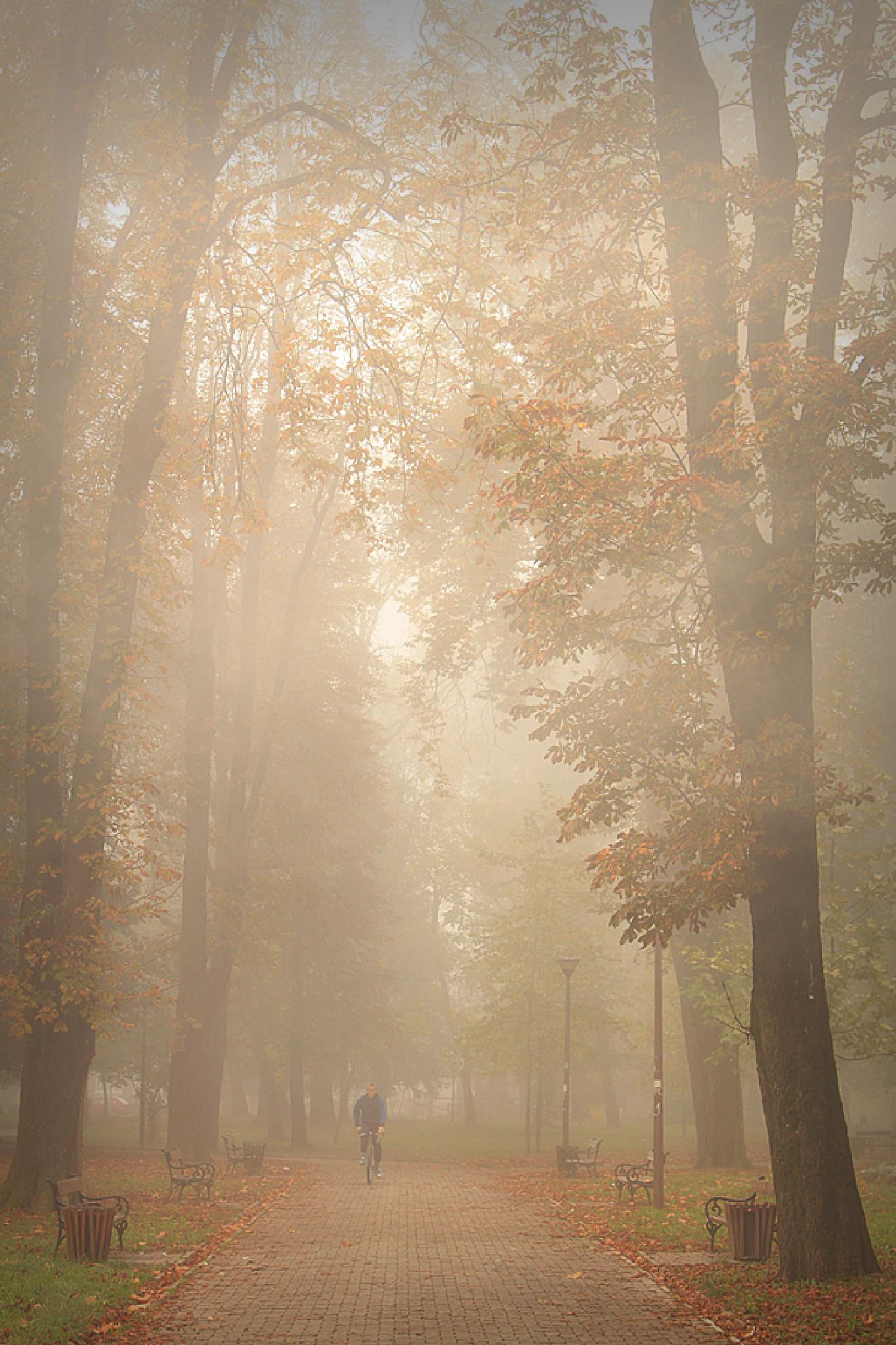 autumn park by lenka samardzic