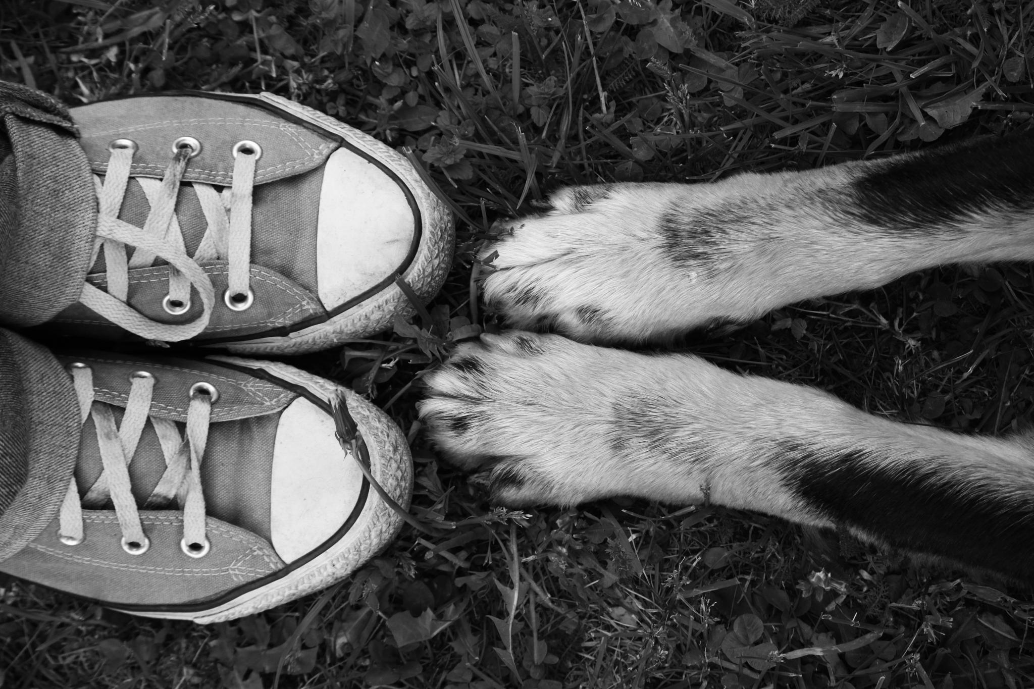 friendship story by lenka samardzic