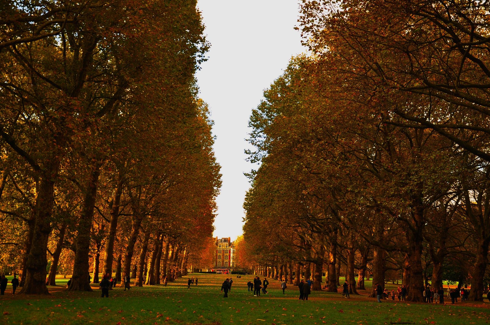 Green Park by Ali Bahceli