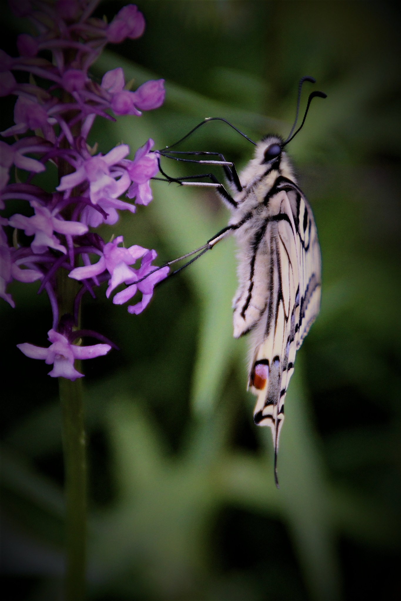 Butterfly having breakfast.... by Facts60