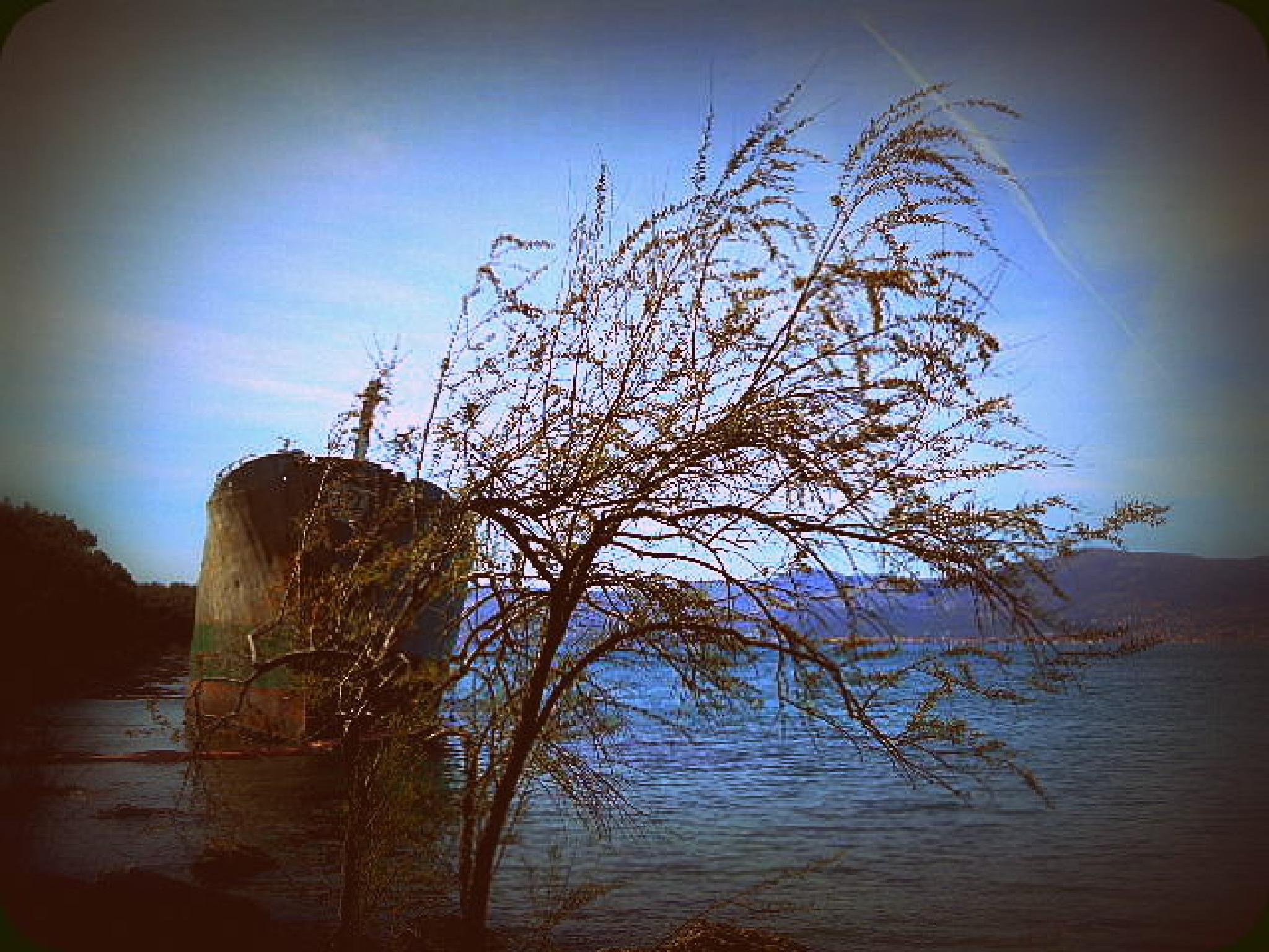 shy ship by ermnat
