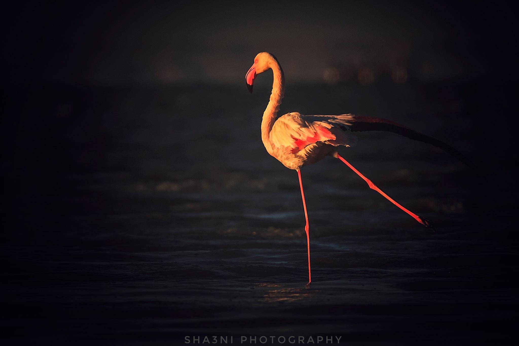 Dancing  by Zeeshan Ashraf