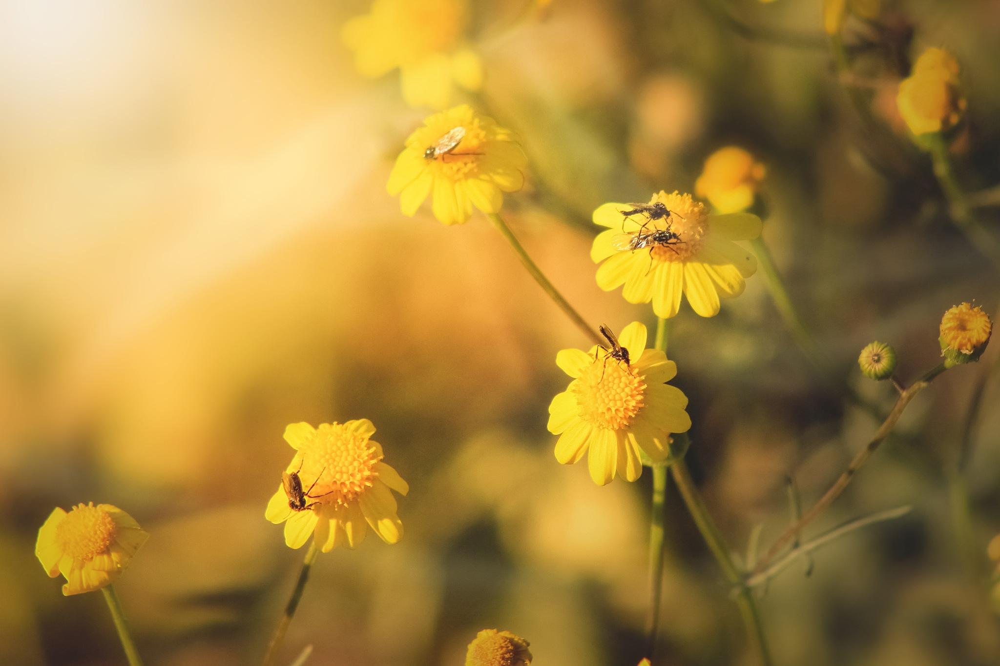 A Sunny day by Zeeshan Ashraf